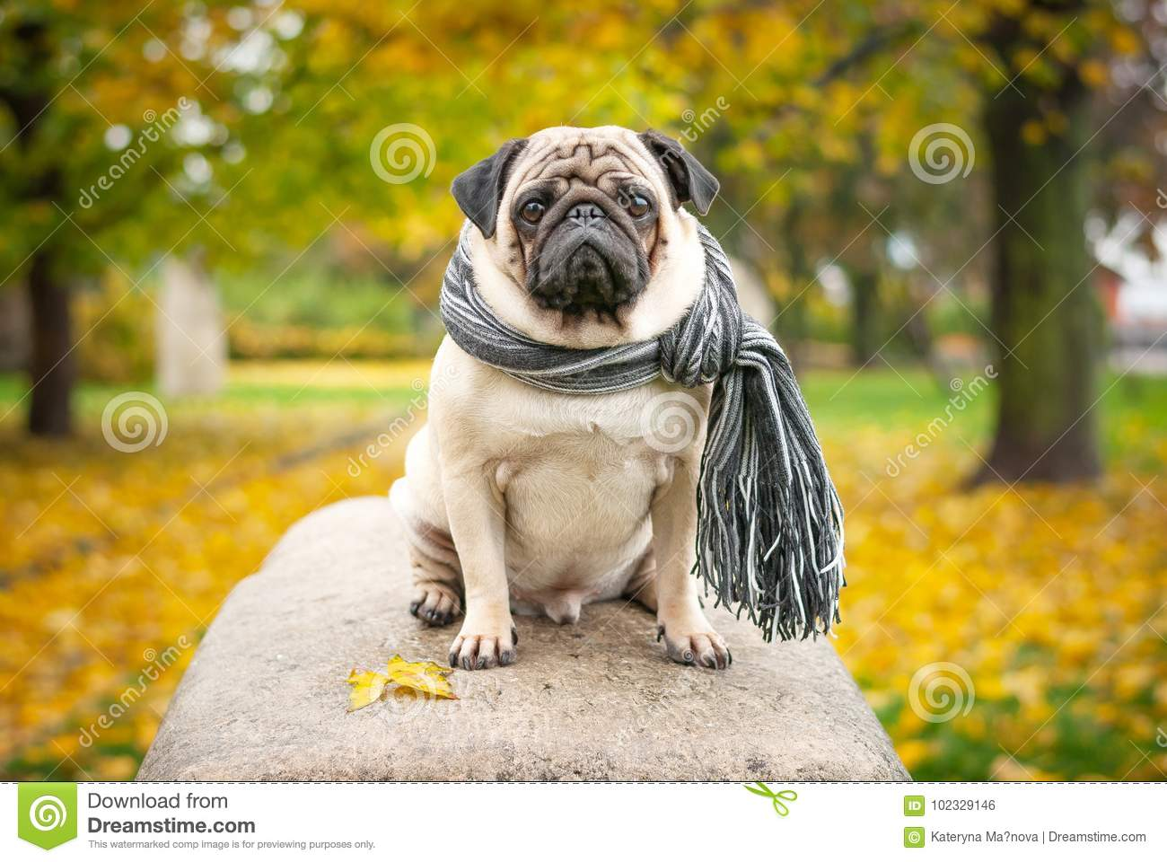 Dating site for pug lovers