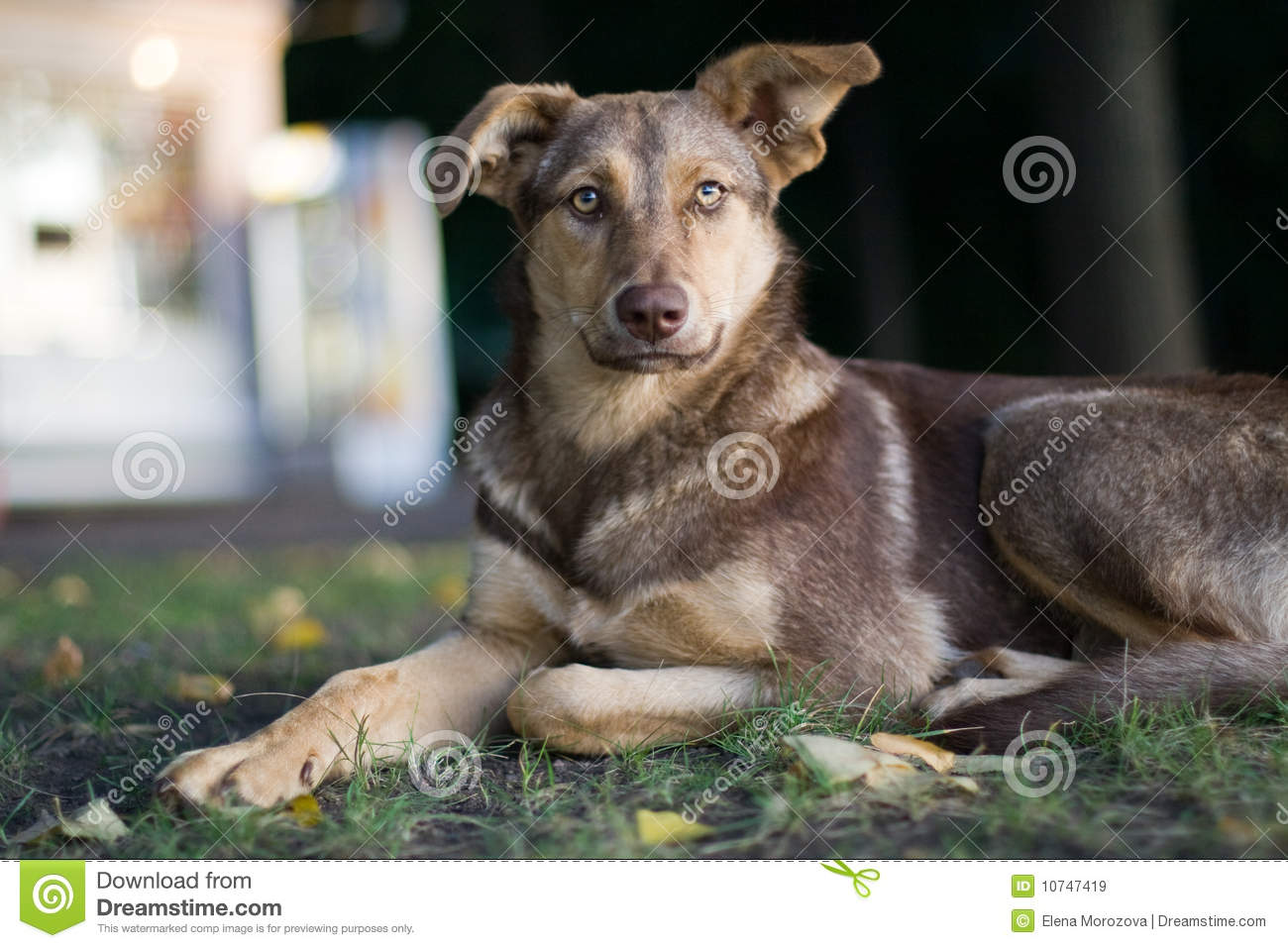 Sad Stray Dog Royalty Free Stock Images - Image: 10747419
