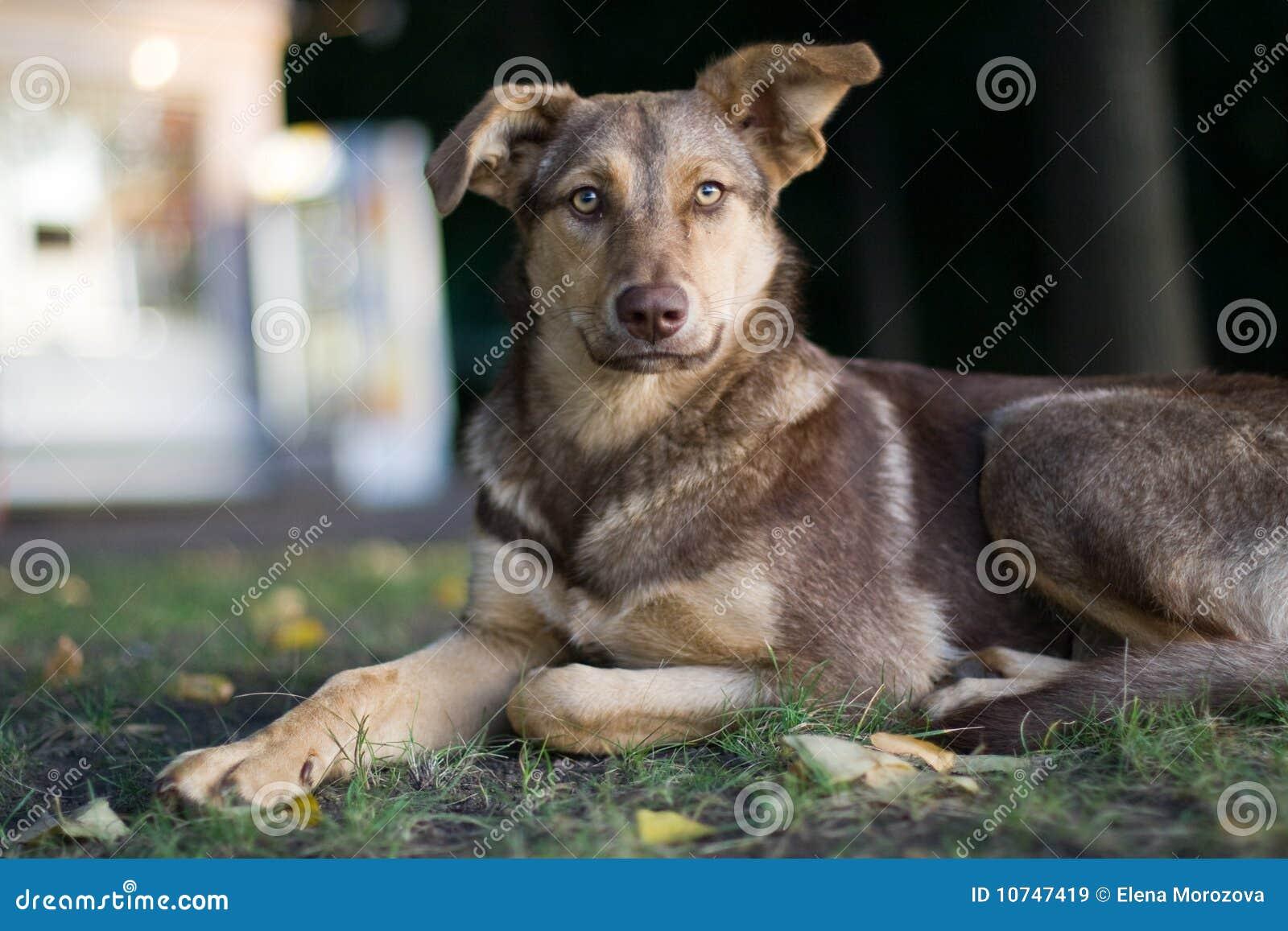 Sad Stray Dog Royalty Free Stock Images - Image: 10747419