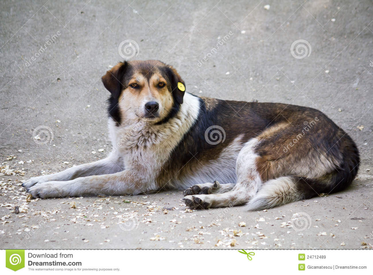 Sad Stray Dog Royalty Free Stock Images - Image: 24712489