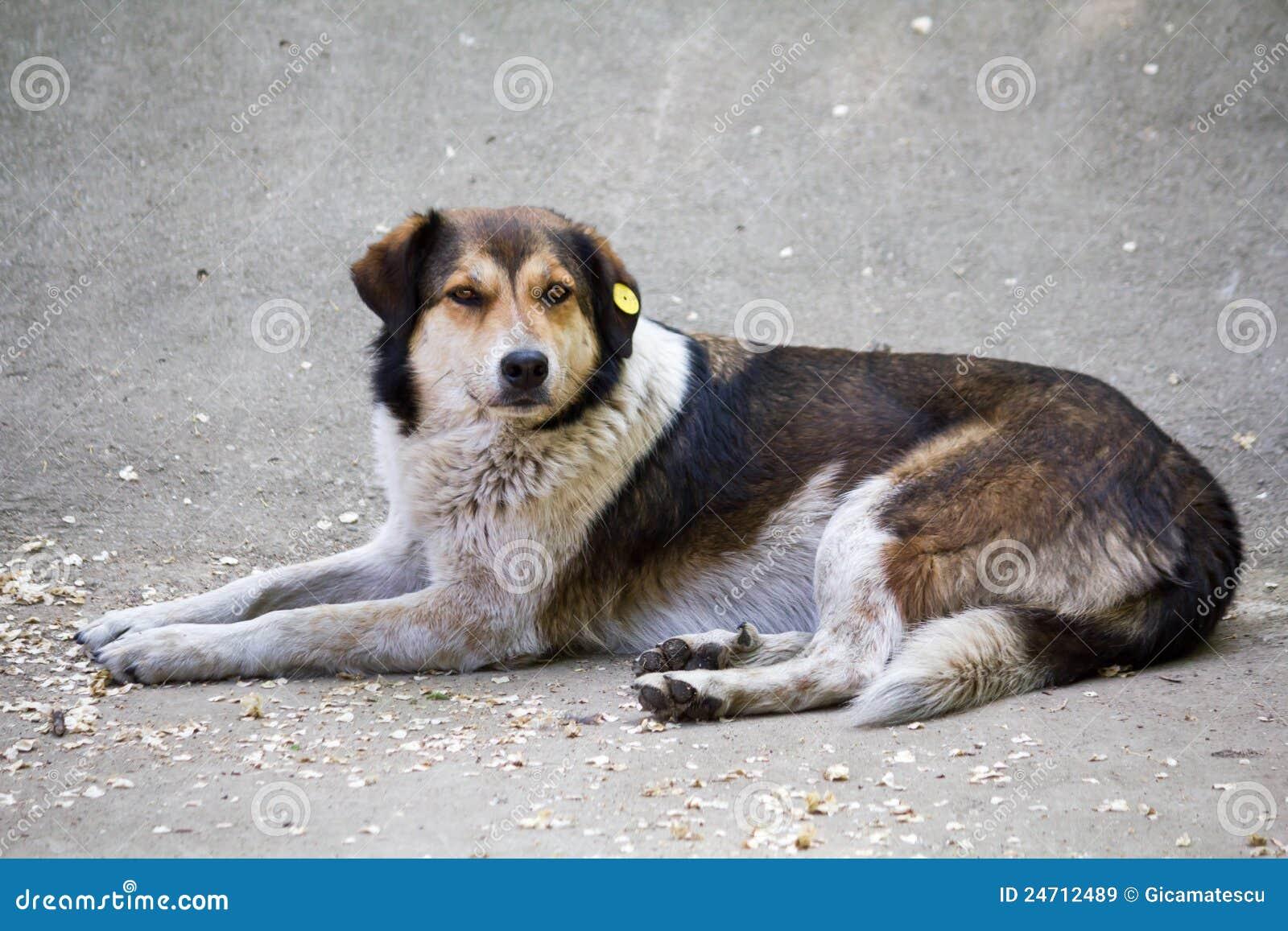 Sad Stray Dog Royalty Free Stock Images - Image: 24712489