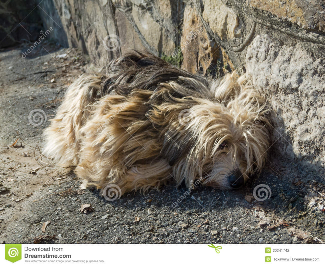 Sad Stray Dog Stock Photography - Image: 30341742