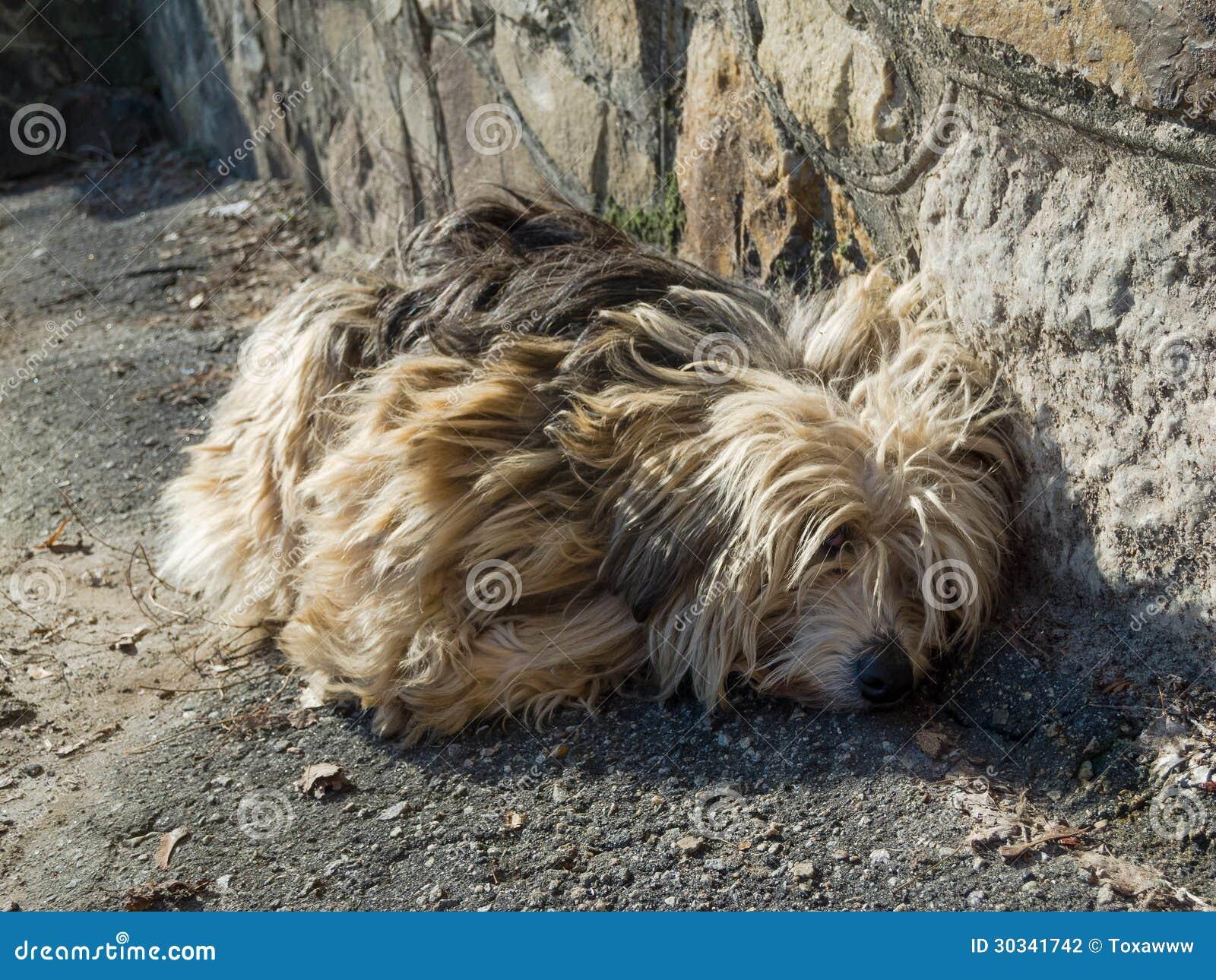 Sad Stray Dog Stock Photography - Image: 30341742