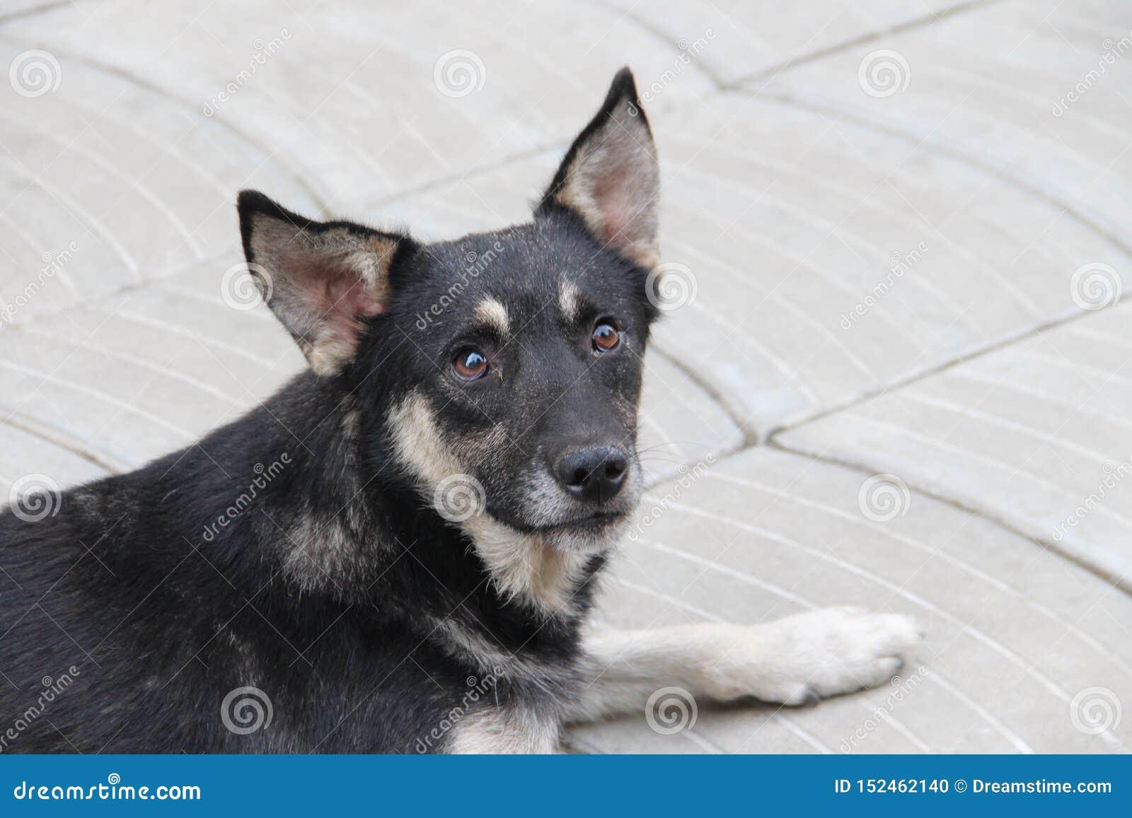 SAD stray f?r hund