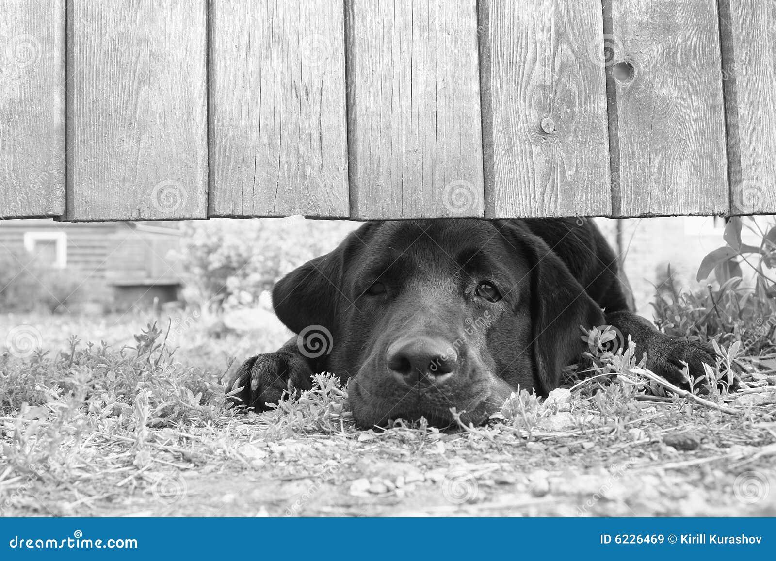 SAD Under För Hundstaket Royaltyfria Bilder - Bild: 6226469 : hundstaket : Staket