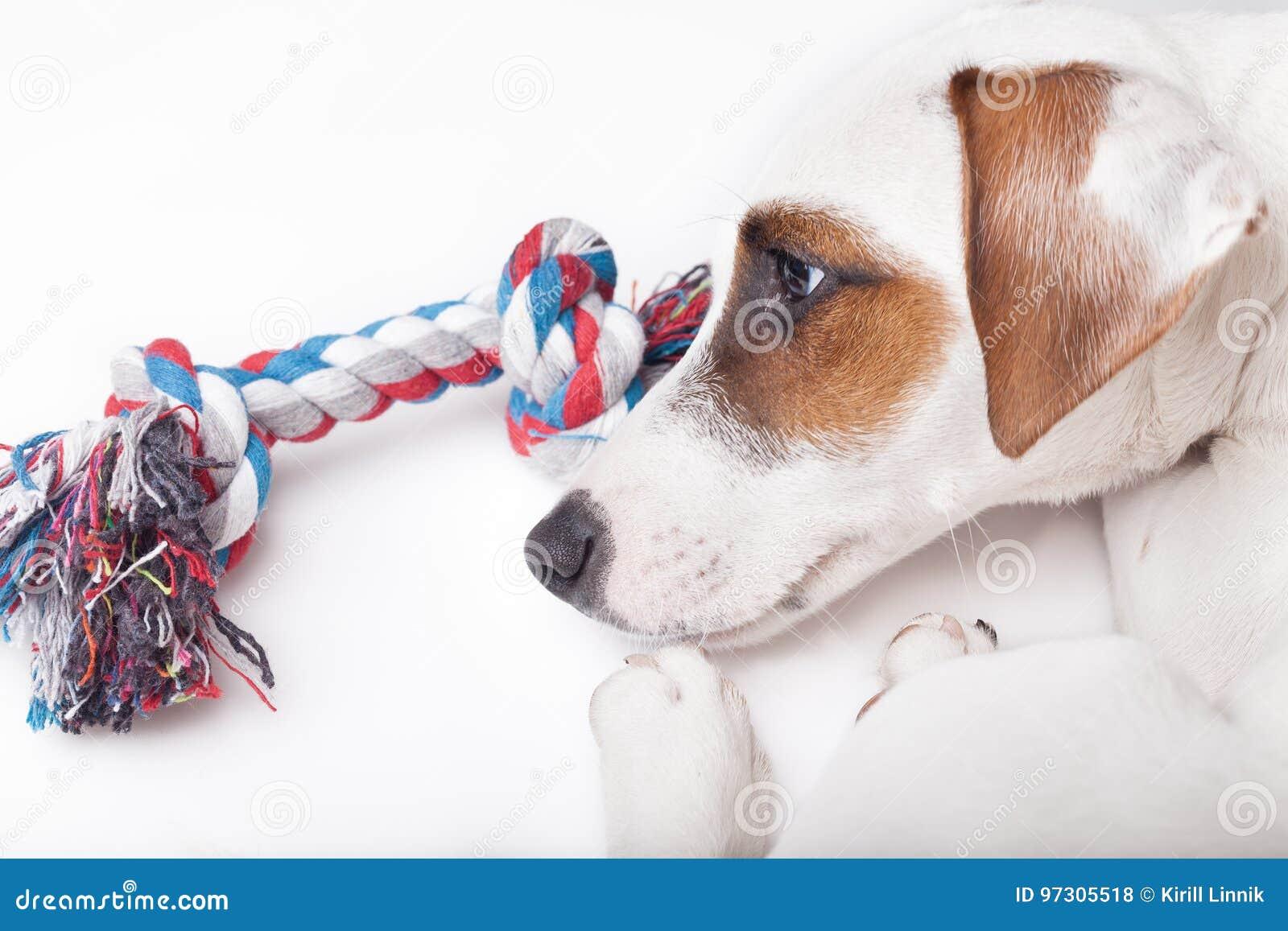 Download Sad and upset dog stock photo. Image of purebred, breed - 97305518