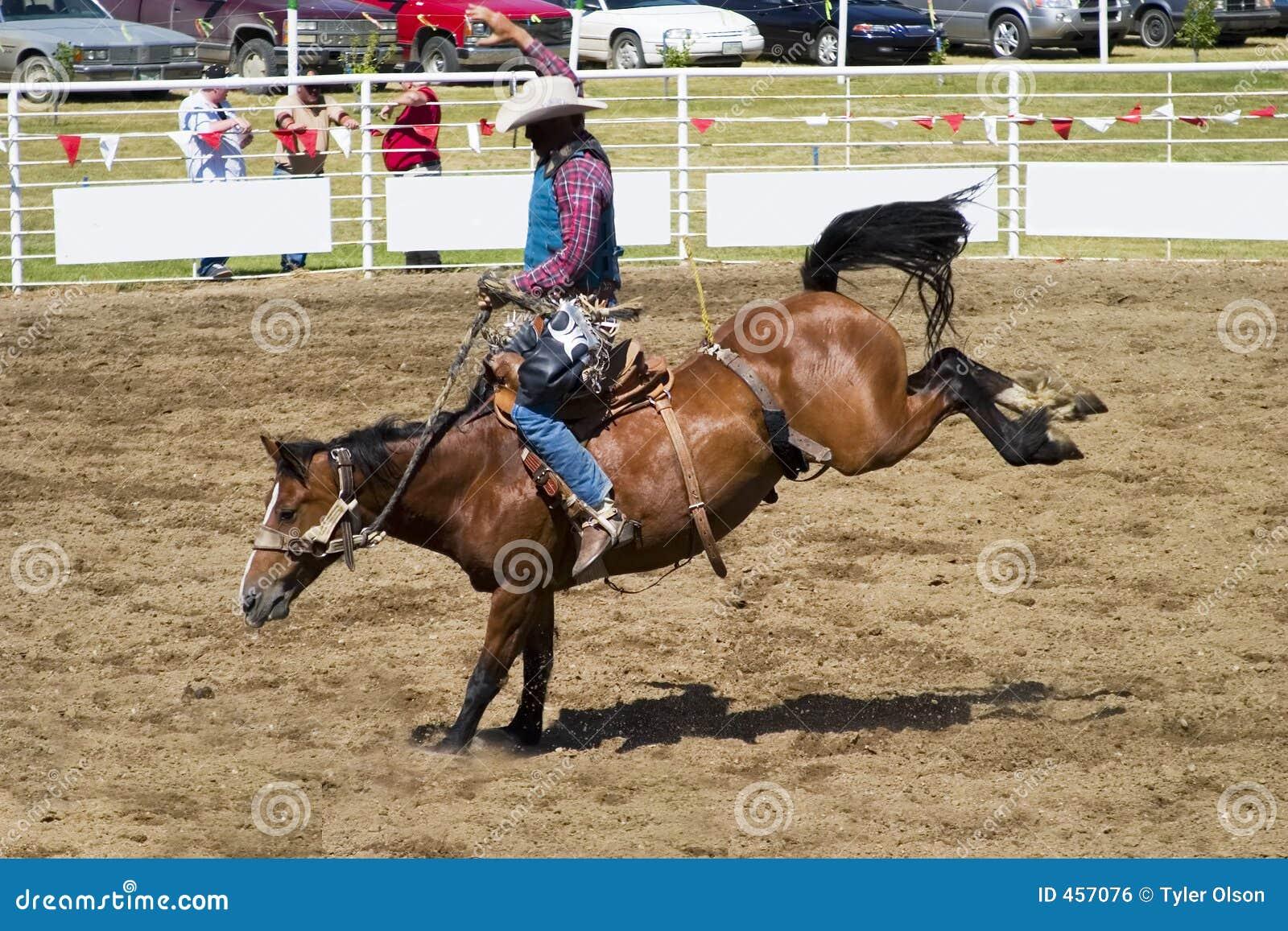 Download Saddle Bronc stock photo. Image of sport, rope, stallion - 457076