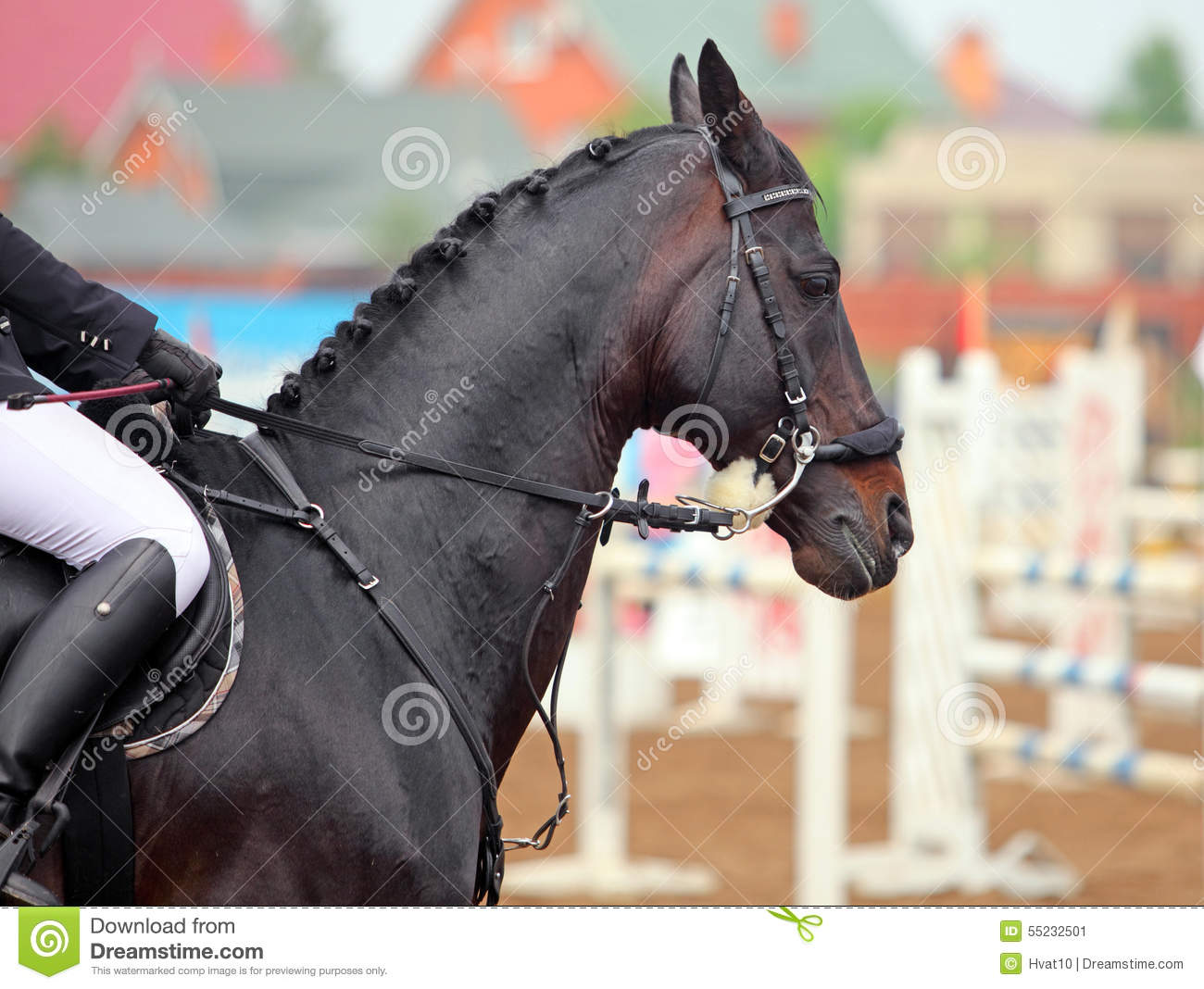 Saddle Horse With Hackamore Bridle Stock Photo Image