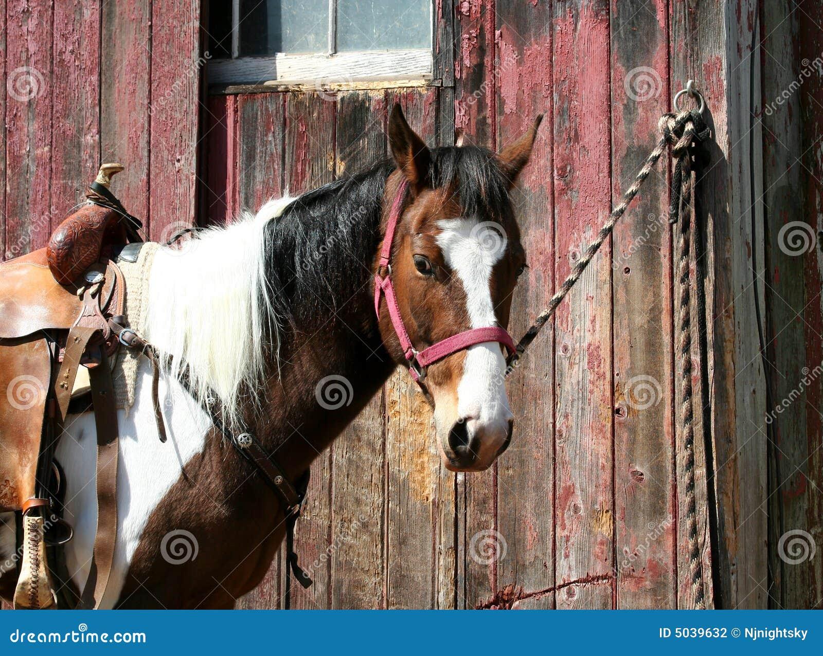 Яйца привязали к коню 10 фотография