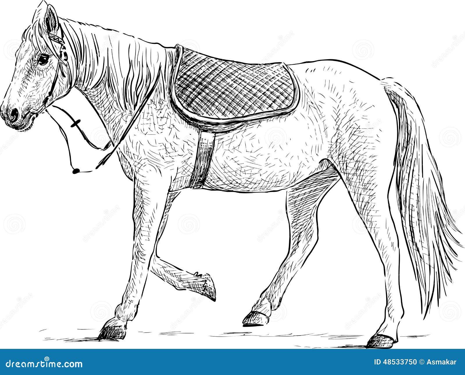 saddled horse stock photo  image of stallion  hand  mane