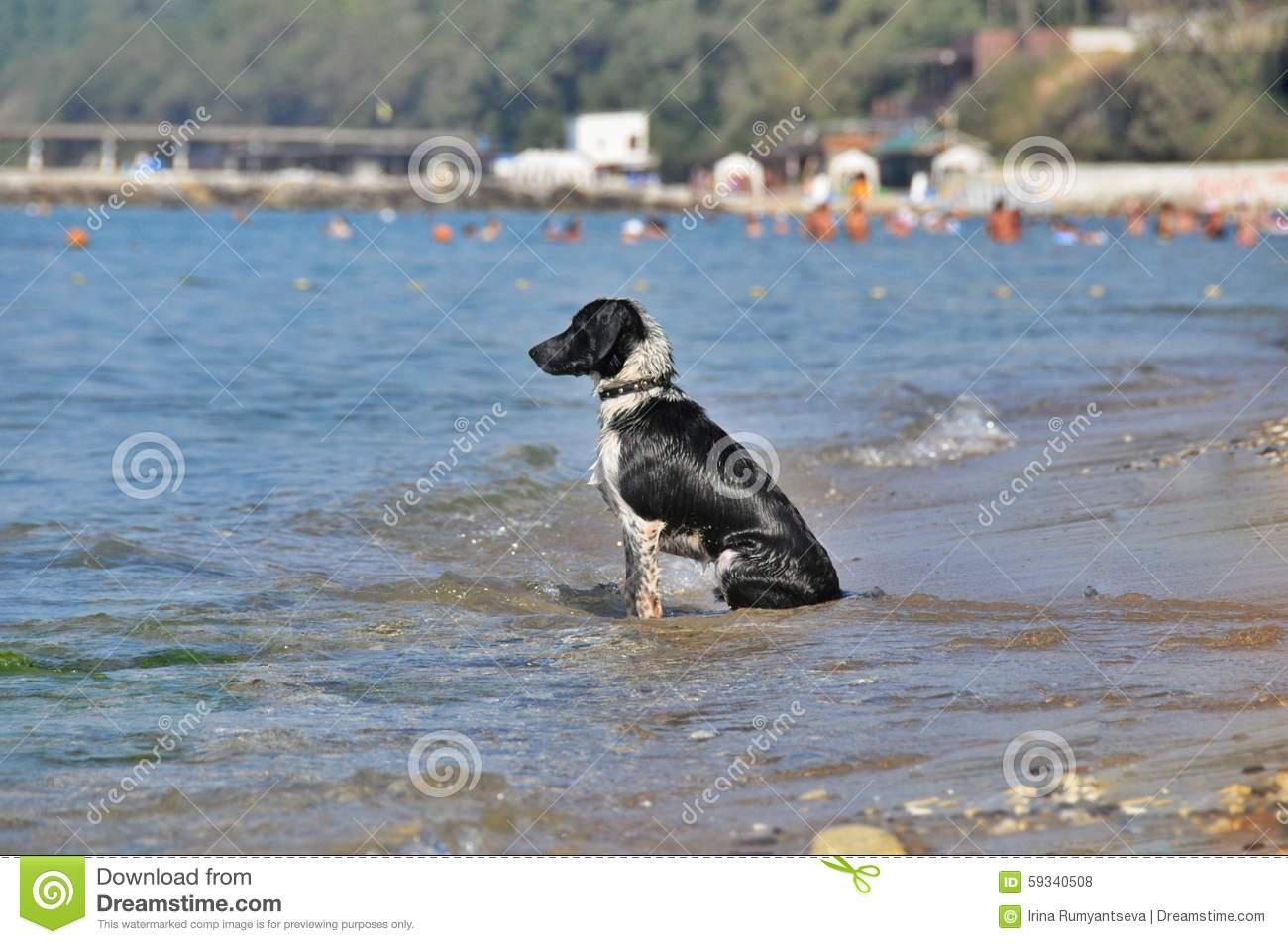 Sadness dogs of the sea