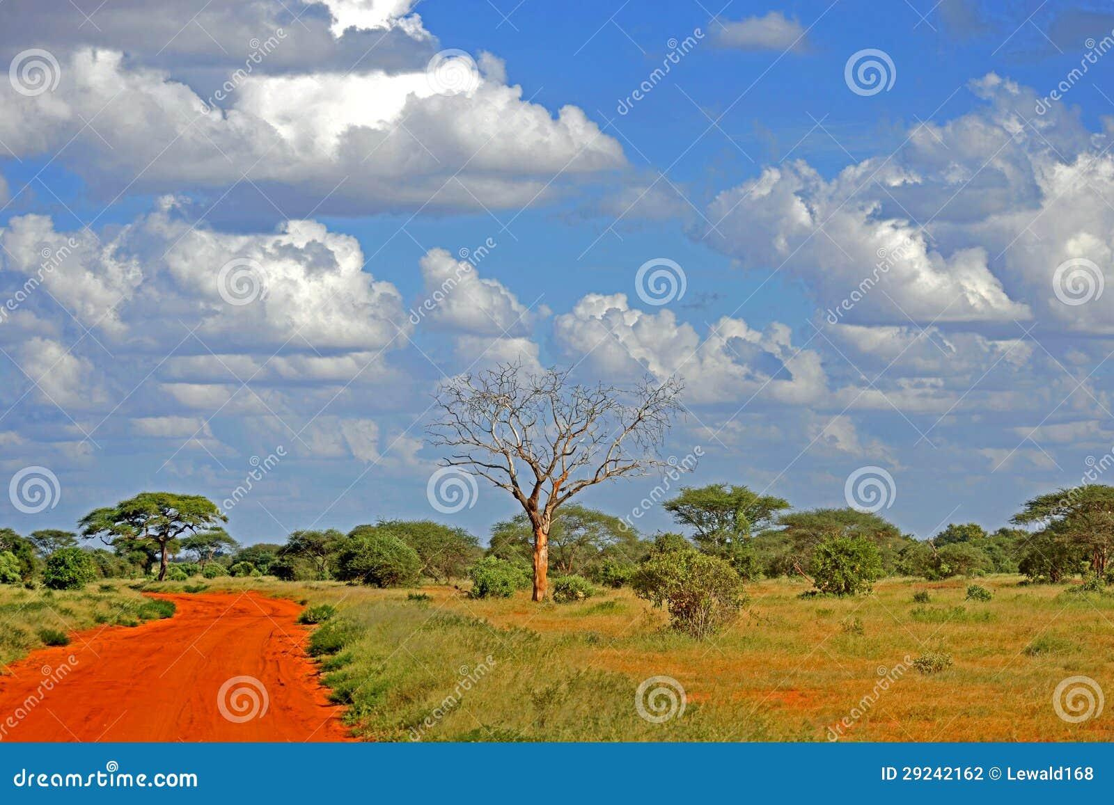 Download Safari foto de stock. Imagem de áfrica, kenya, nuvens - 29242162