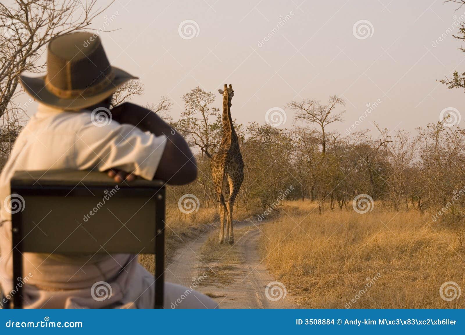 Safari avec la giraffe