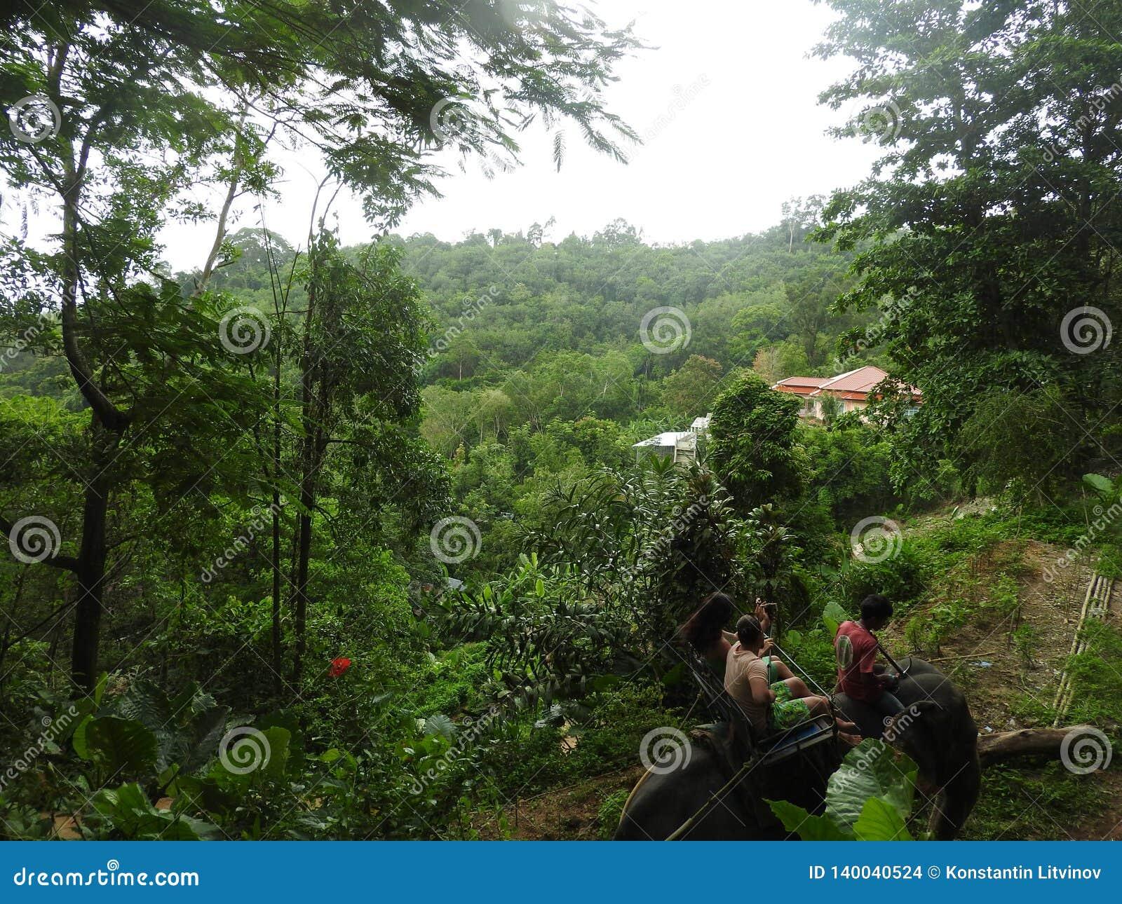 Safari d éléphant dans Dao Pak Park pittoresque en Thaïlande