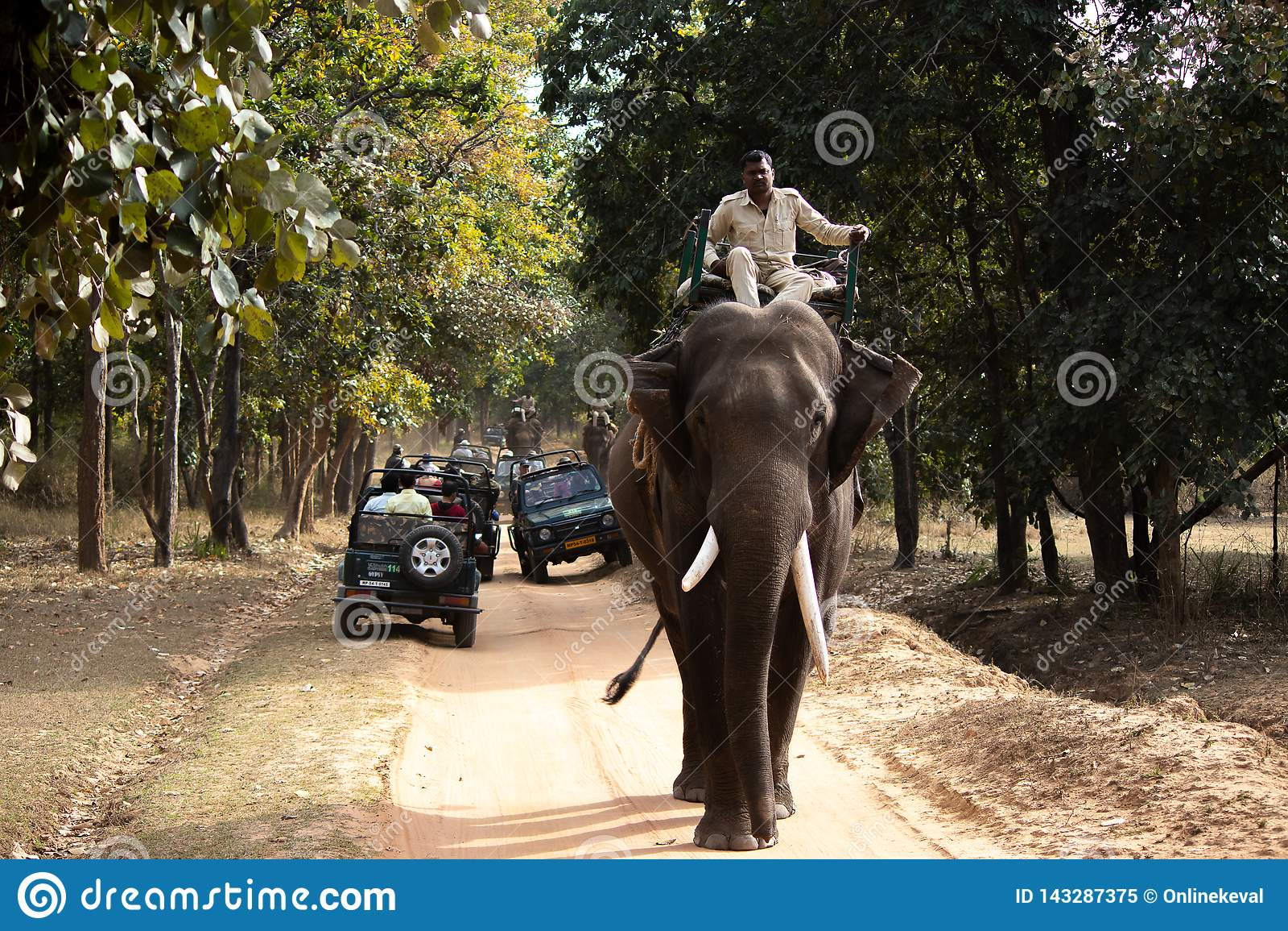 Safari d éléphant en parc national