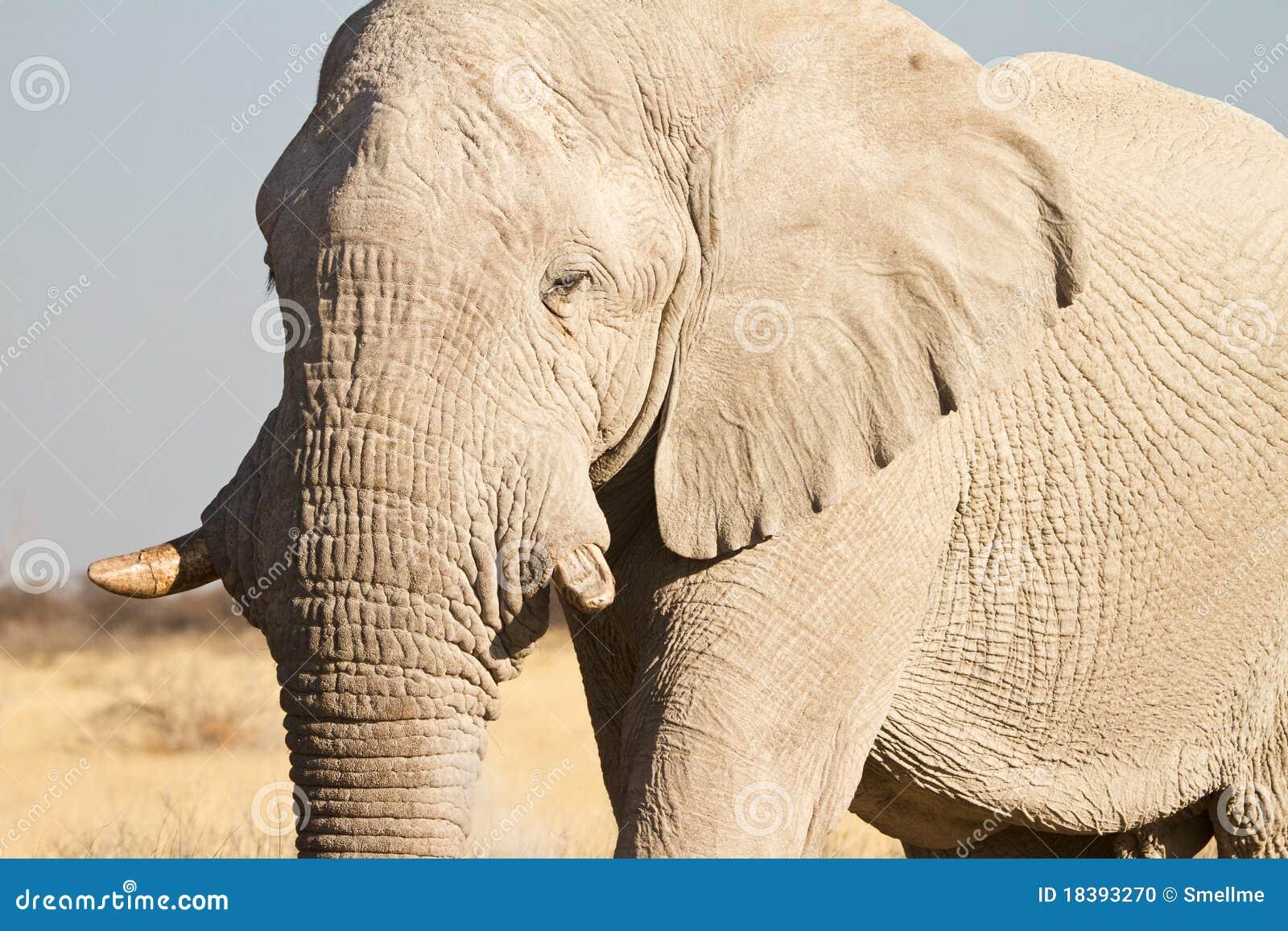 Safari de África