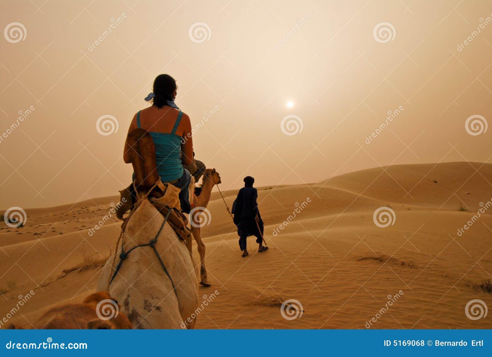 Safari del camello
