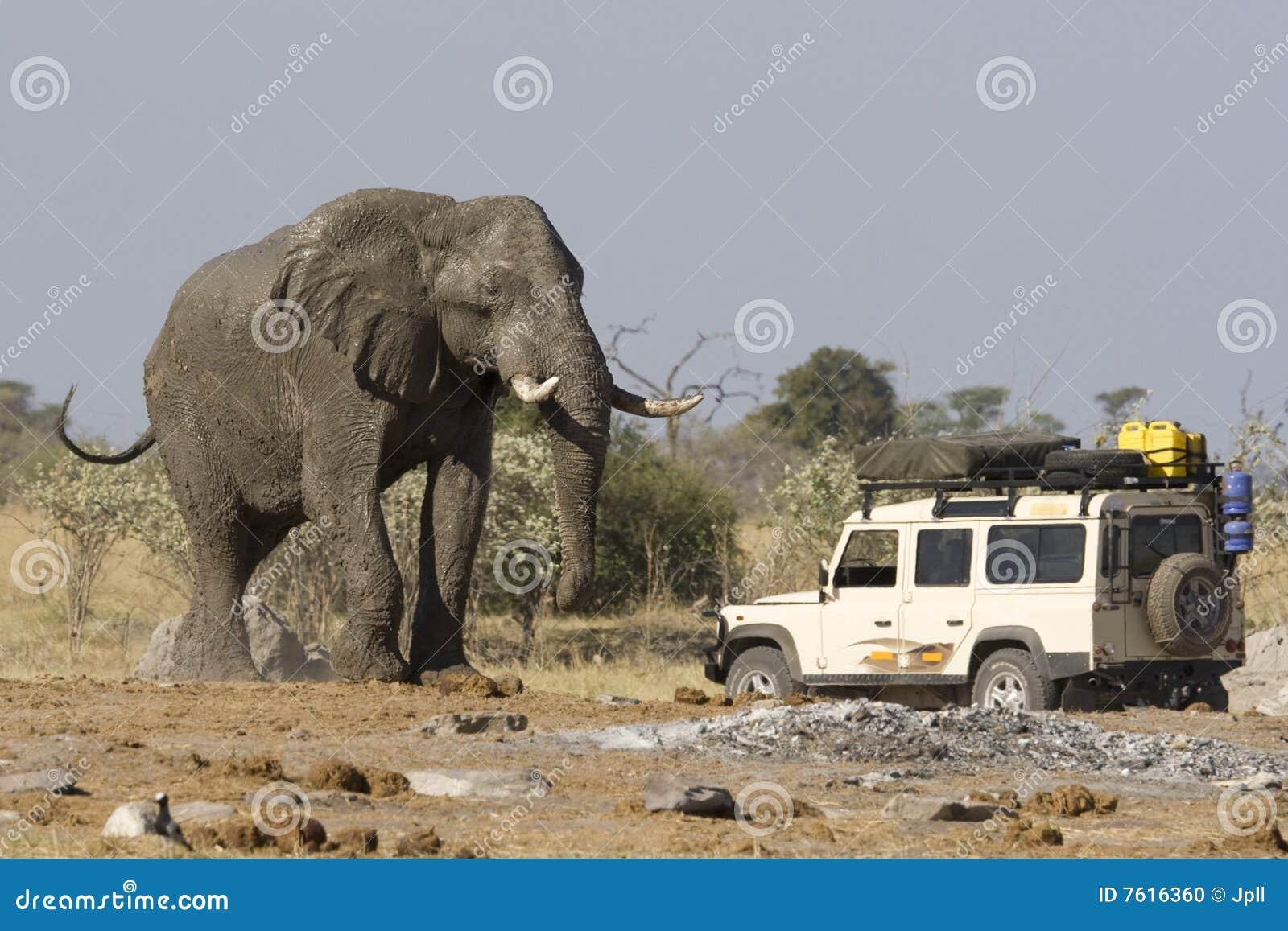 Safari del elefante