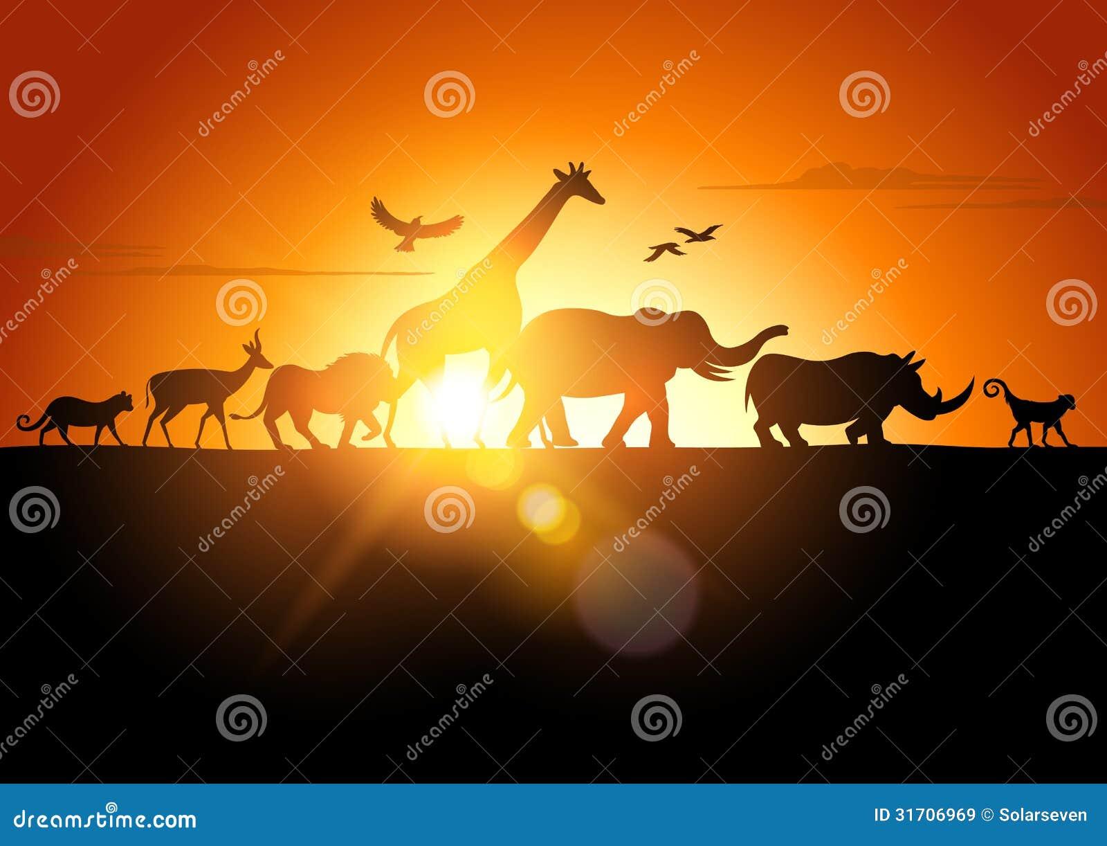Safari di tramonto