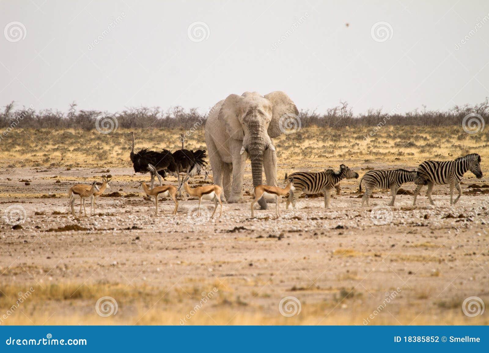Safari Namíbia