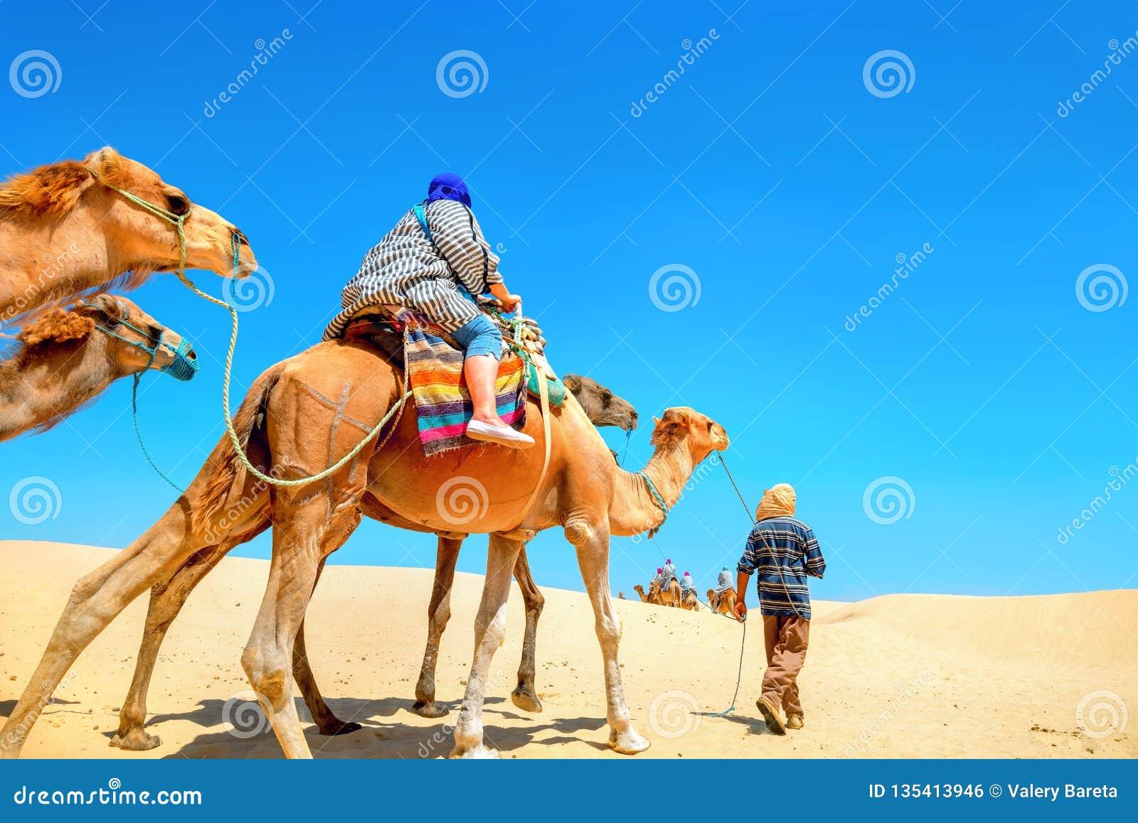 Safari tourism on camels. Sahara desert, Tunisia, North Africa