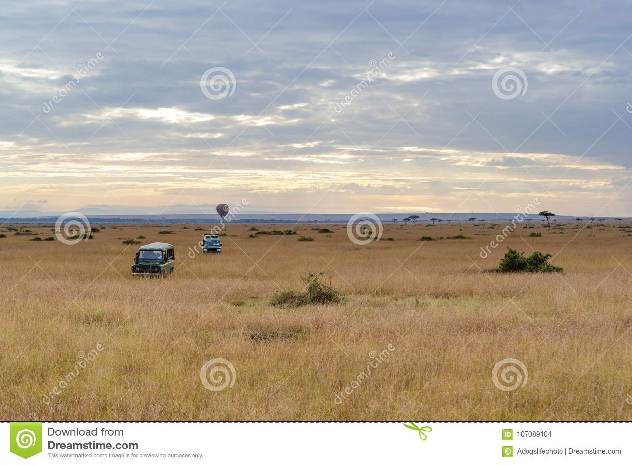 Safari Vehicles In Open Kenya Field Stock Photo - Image of vehicle