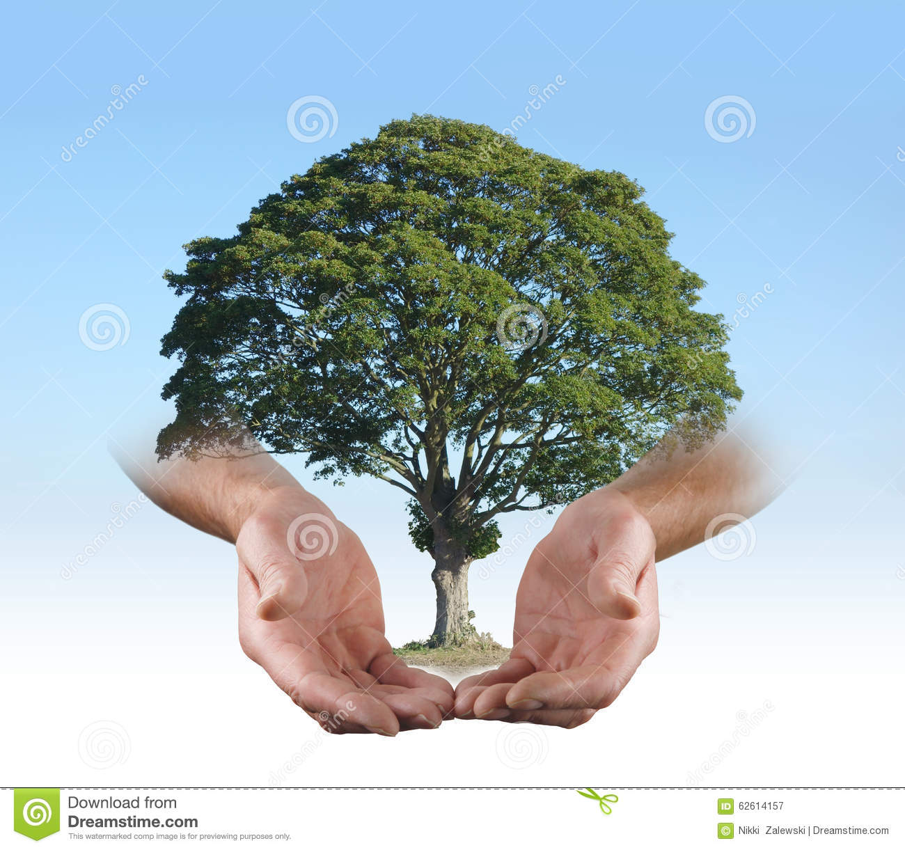 In The Safe Hands Of A Tree Surgeon Stock Photo - Image ...