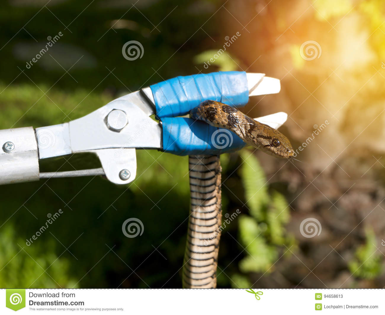 Safe Kids From Snake Catching Snake In Garden Home With ...
