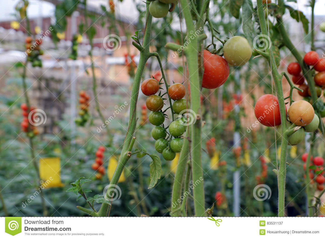 exposure seed garden enlarge exchange southern g tomato peach lrg to p click