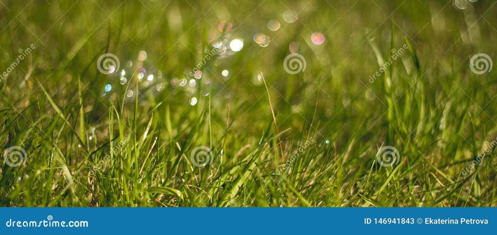 Saftigt och ljust - grönt gräs close upp Gr?n gr?sbakgrund Texturen av gr?set
