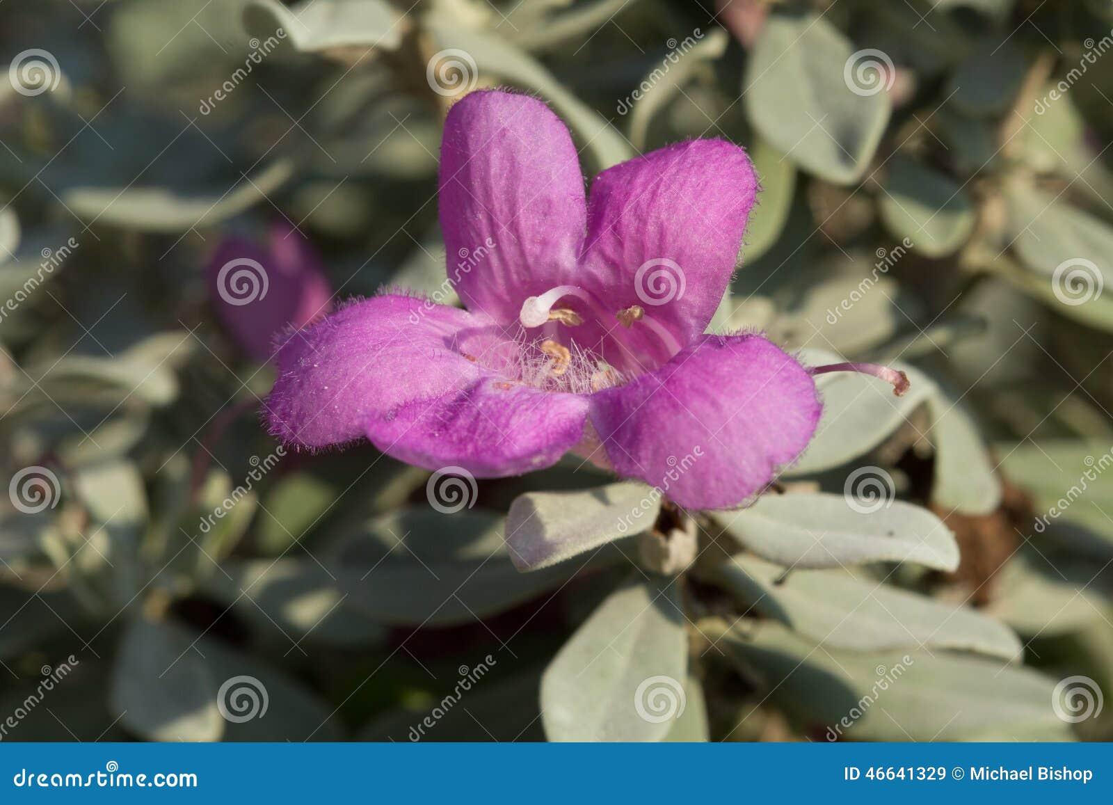Sage Bloom
