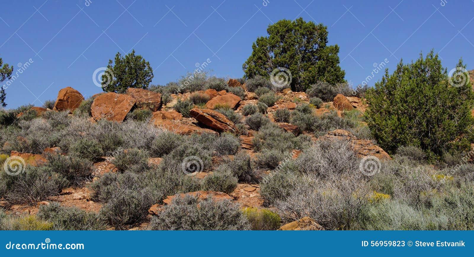 Sage brush and mesquite desert landscape, in desert mesa, near Zion ...
