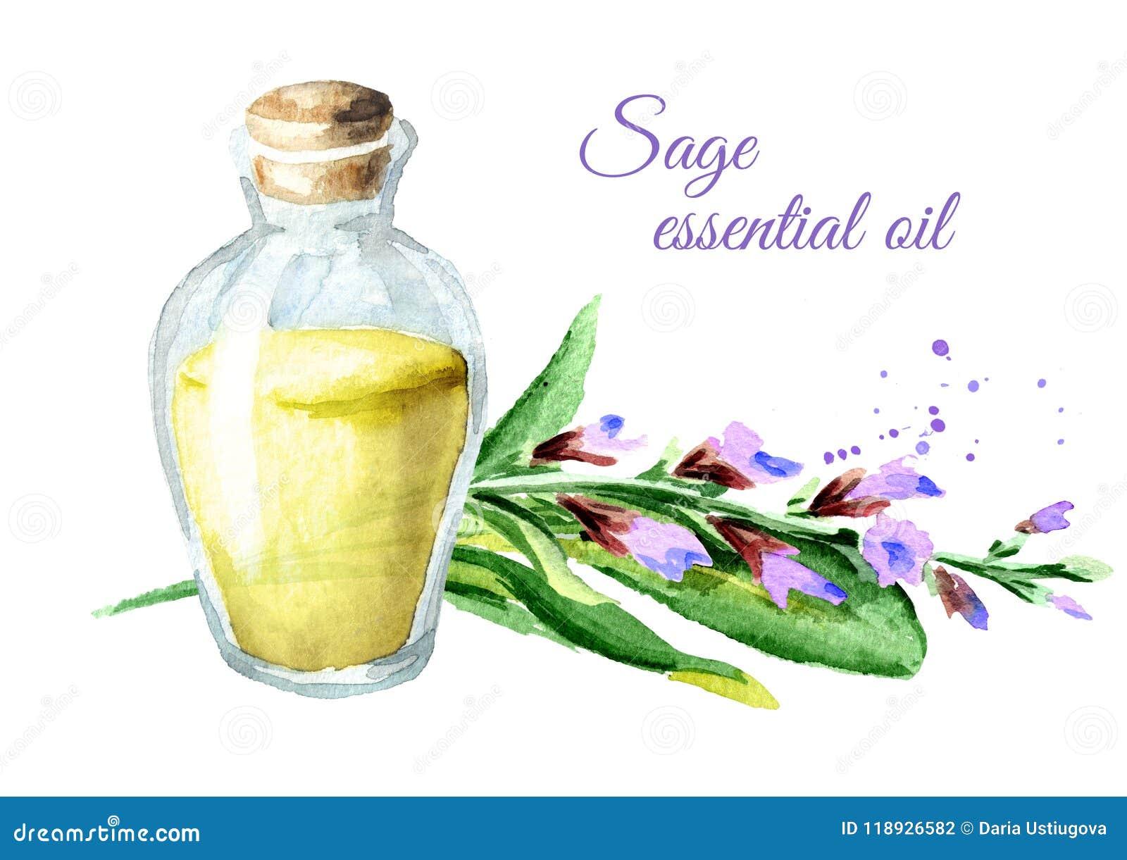 Sage essential oil watercolor hand drawn illustration isolated on sage essential oil watercolor hand drawn illustration isolated on white background mightylinksfo