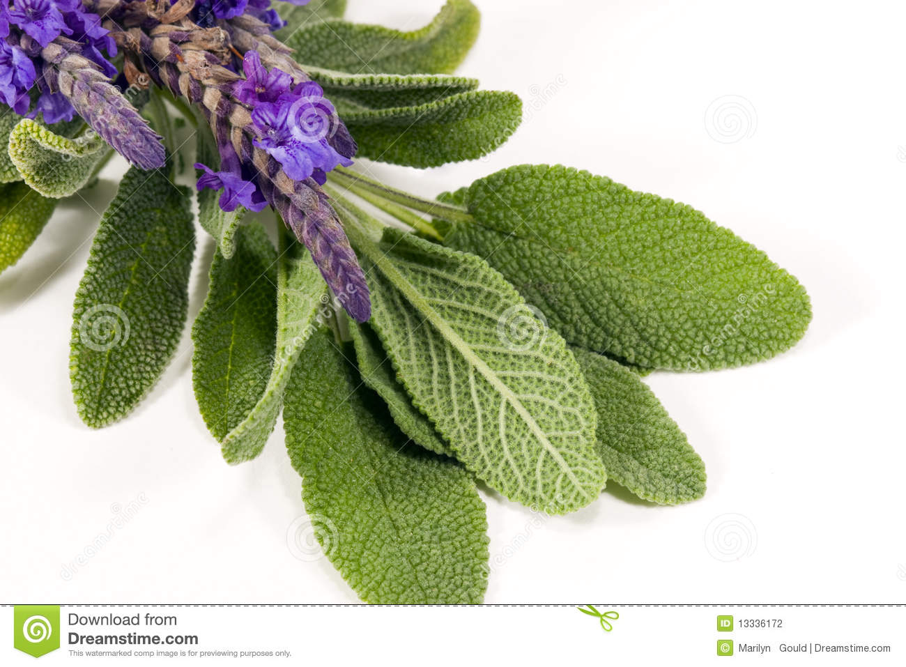 Sage and Lavender