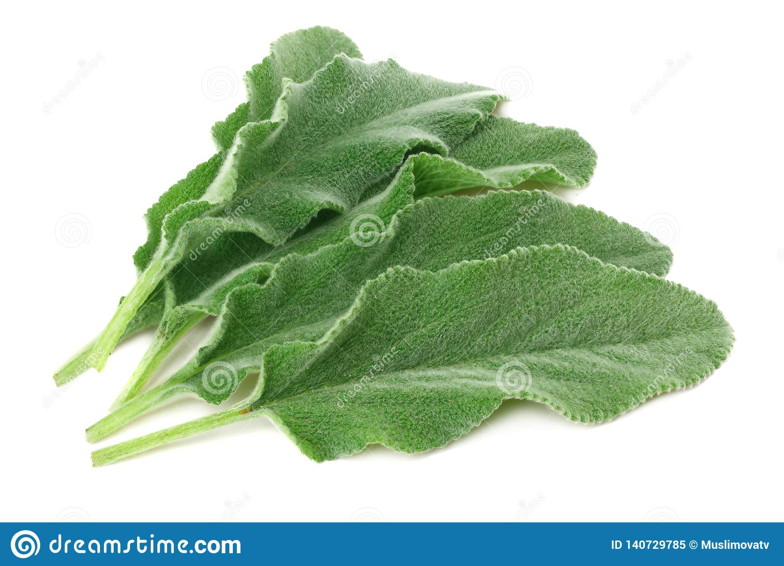 sage leaves isolated on white background. green leaves