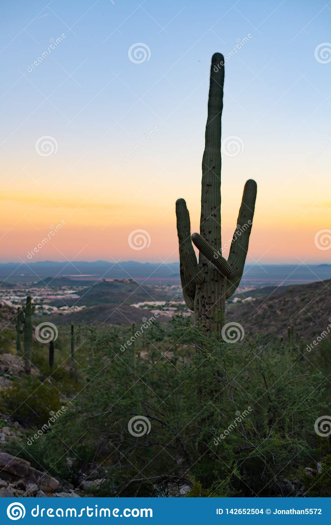 Saguaro Cactus Sunset Arizona