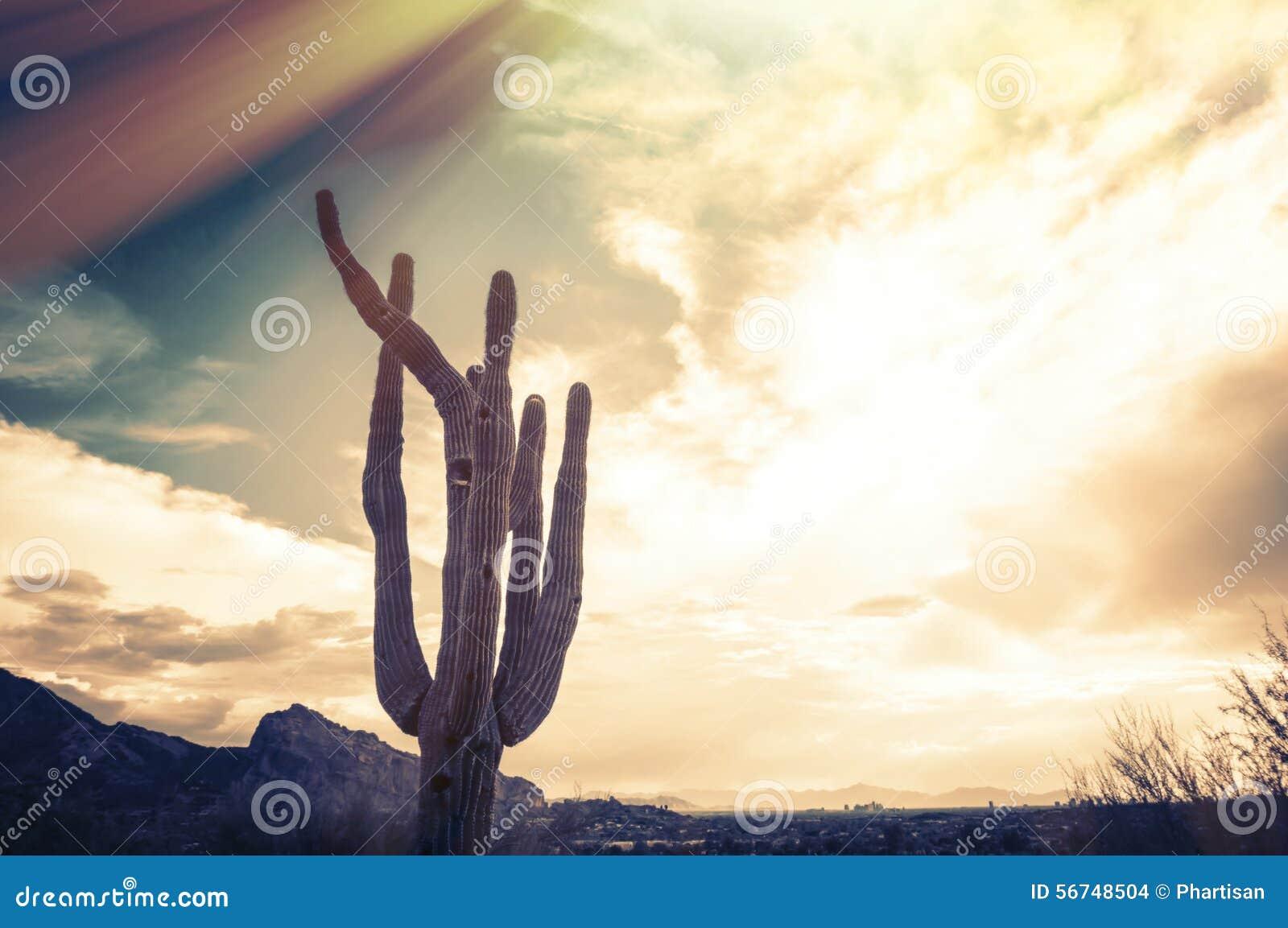 Saguaro Cactus tree - Camelback Mountain, Phoenix,AZ