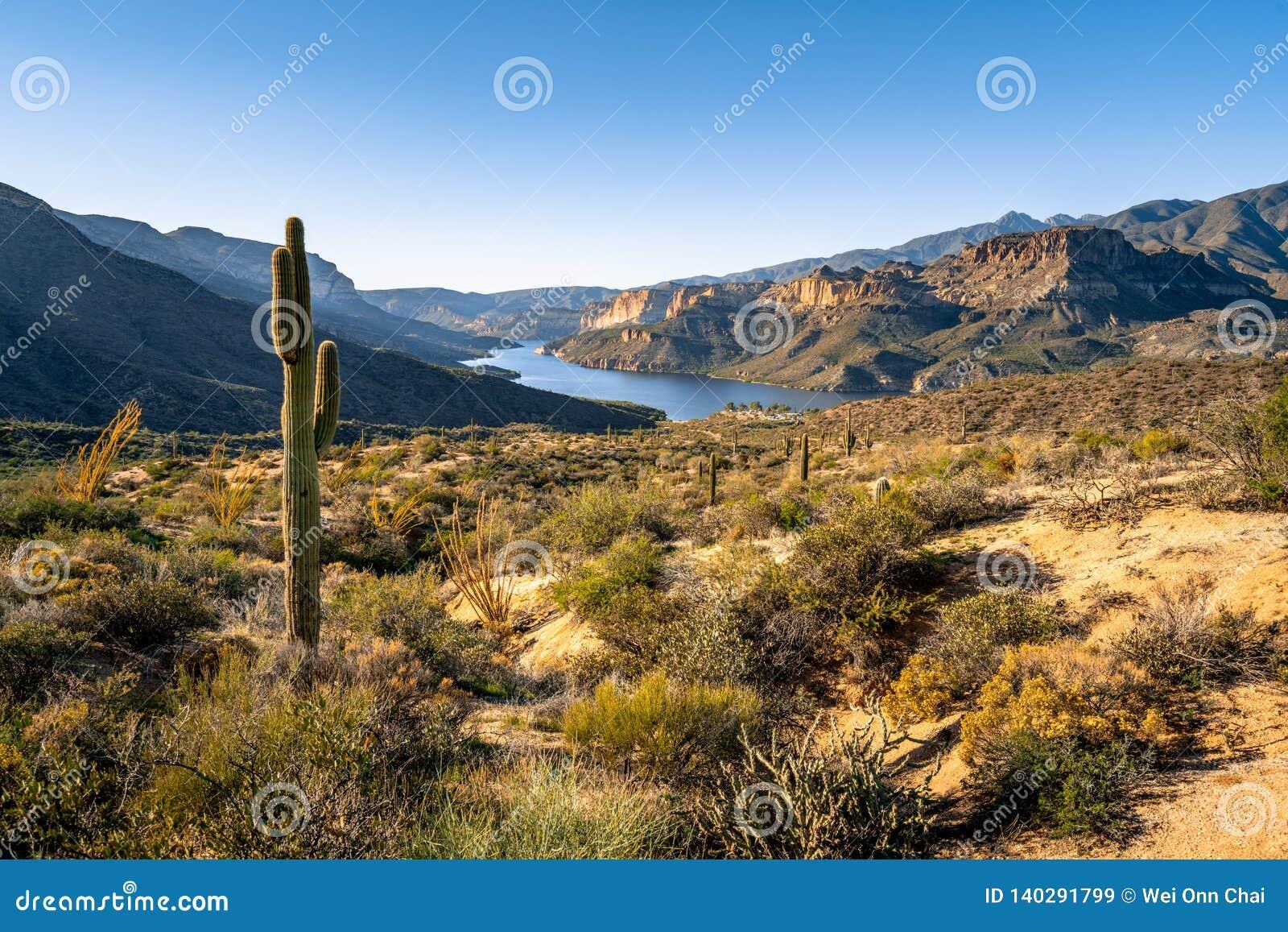 Saguarocactus op deesertland die Apache-Meer overzien