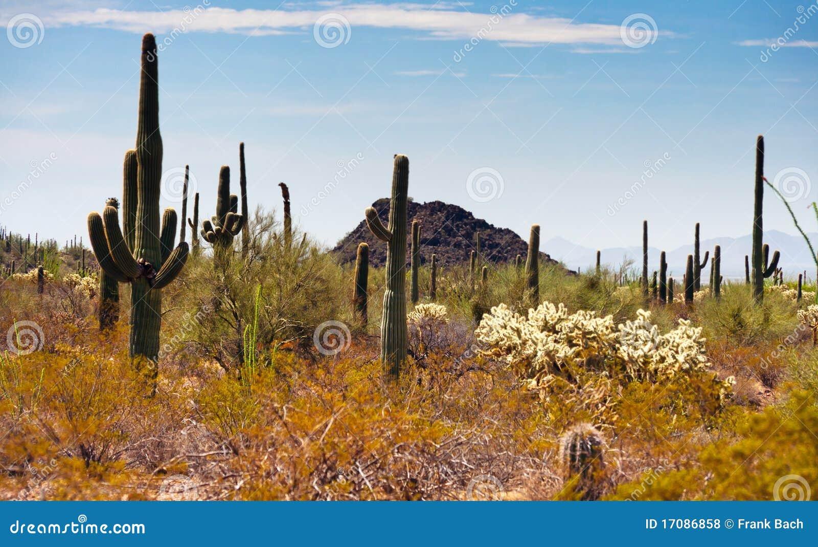 Saguaros трубы органа кактуса