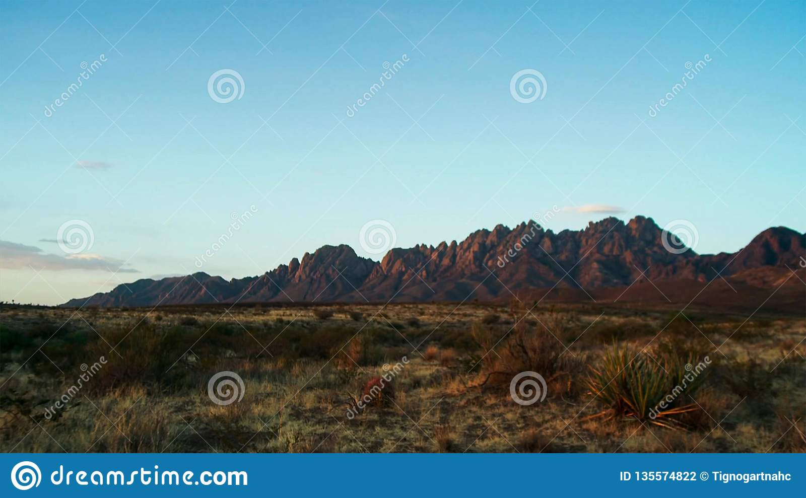 Saguaros at Sunset in front of Superstition Mountains. Sonoran Desert near Phoenix
