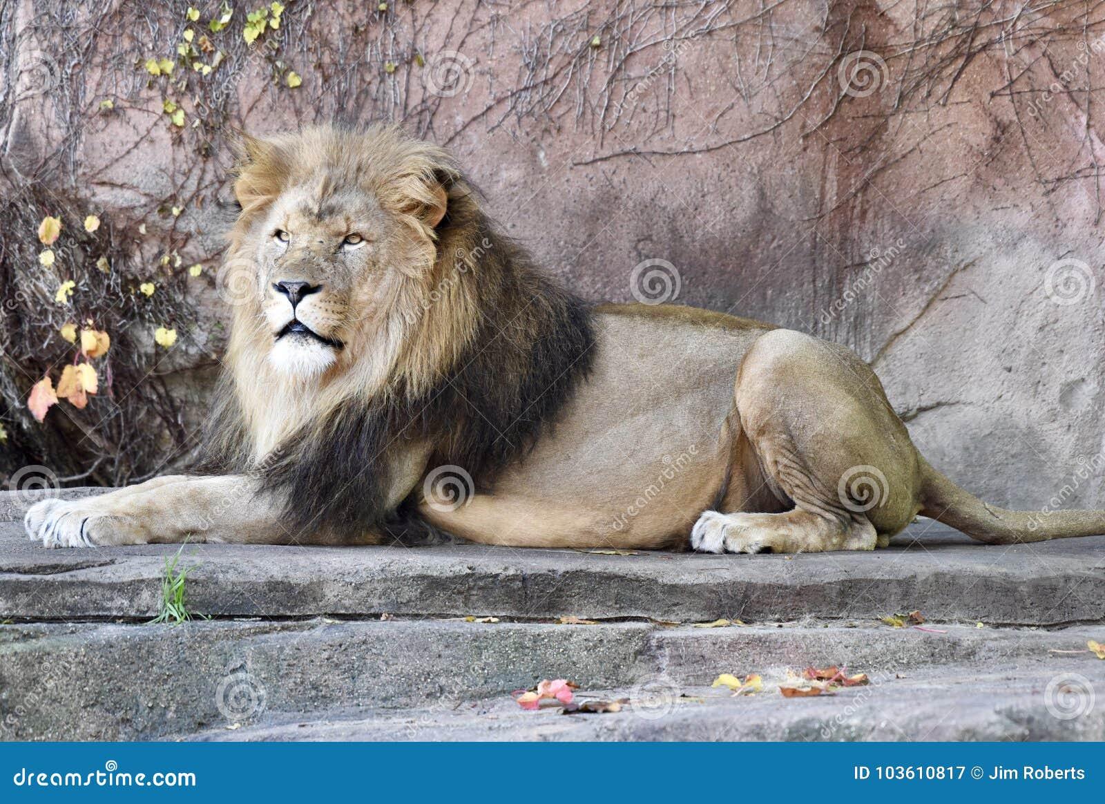 Sahar, roi du zoo