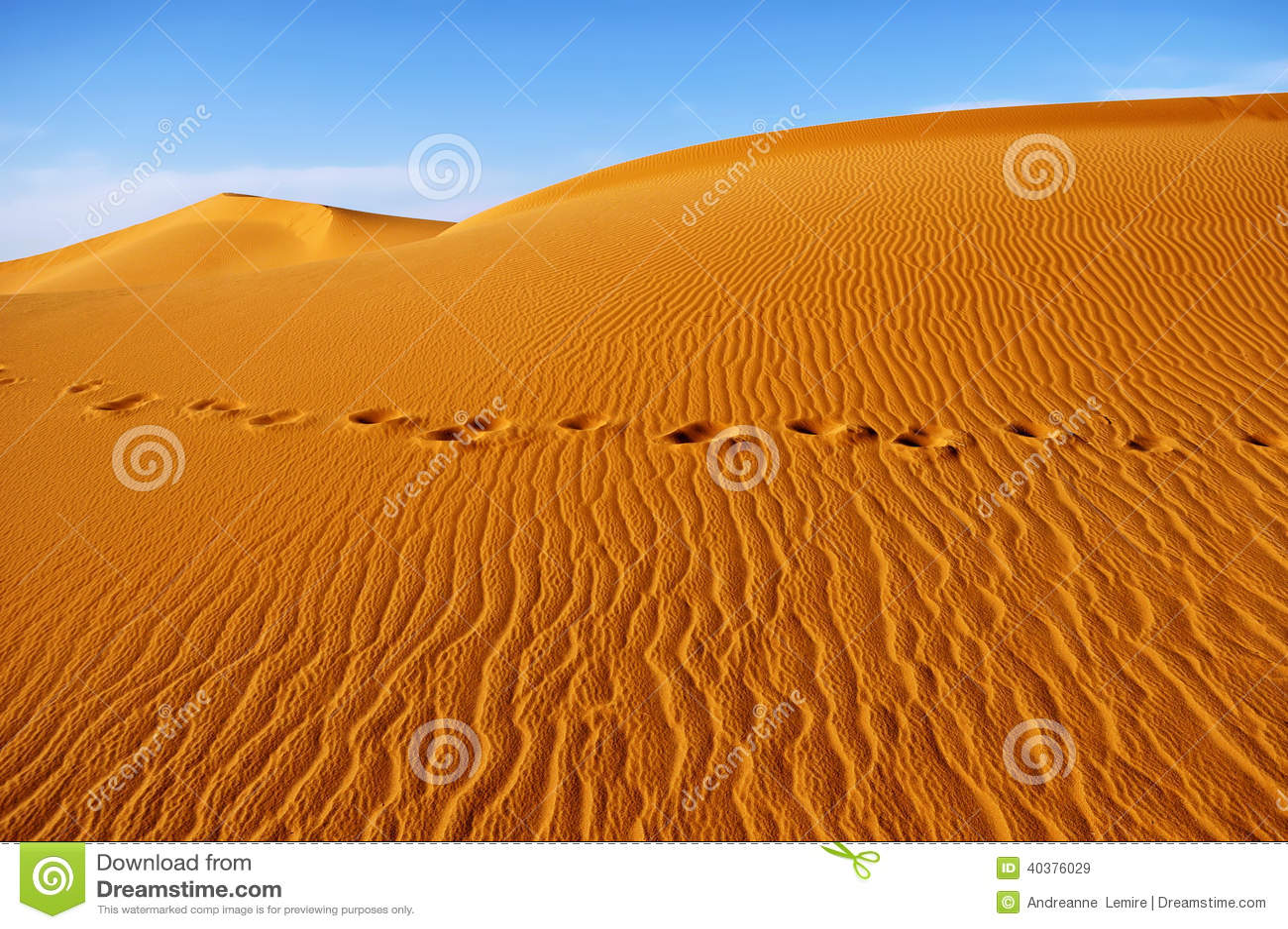 Sahara öken