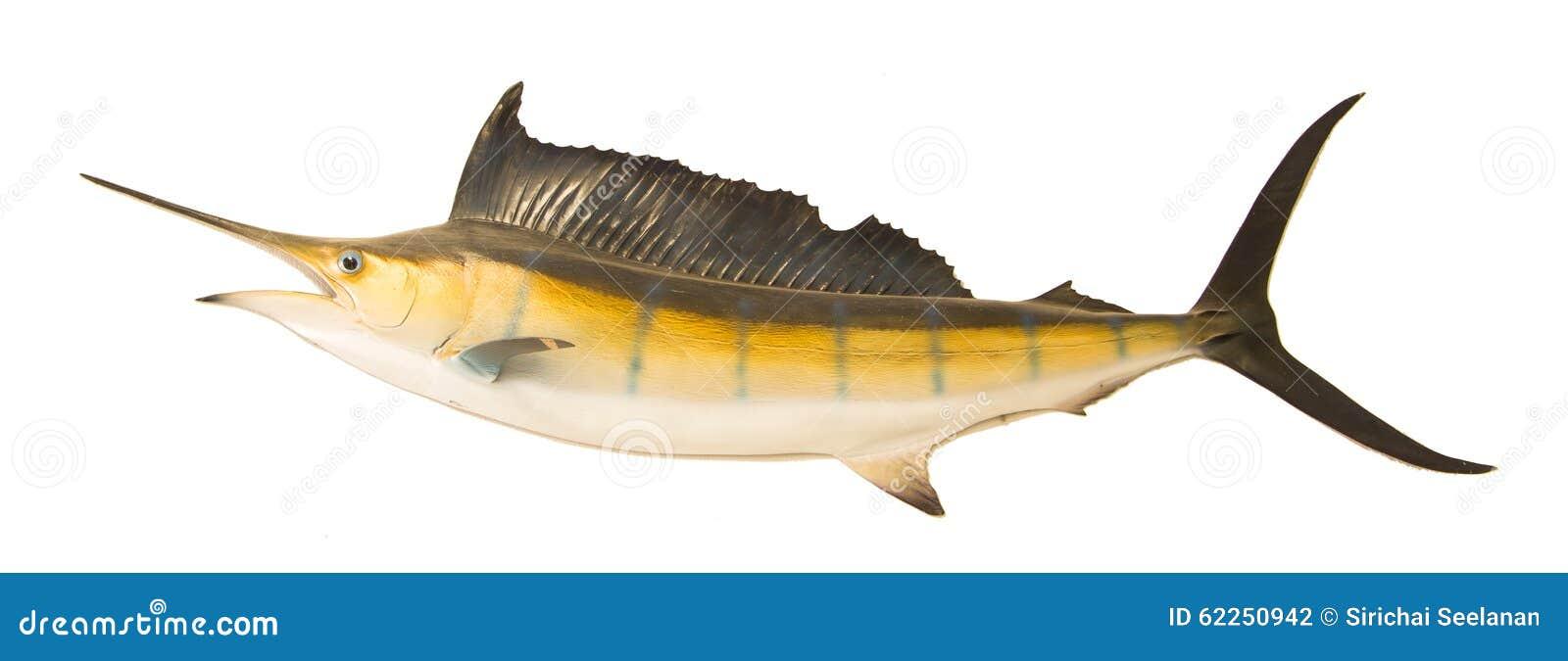 Sailfish πετώντας απομονωμένο midair άσπρο υπόβαθρο
