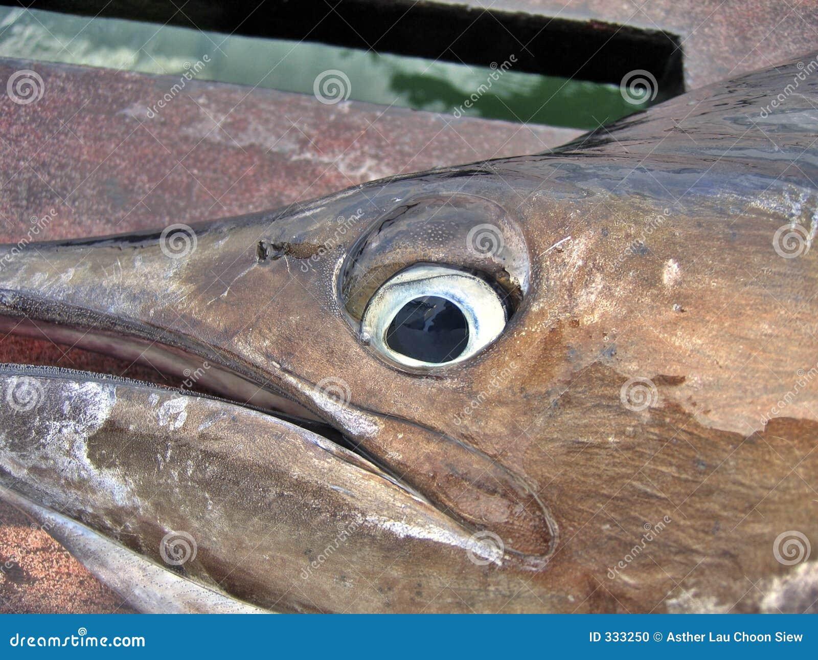 Sailfish eye stock photo image 333250 for Espejo ojo de pescado