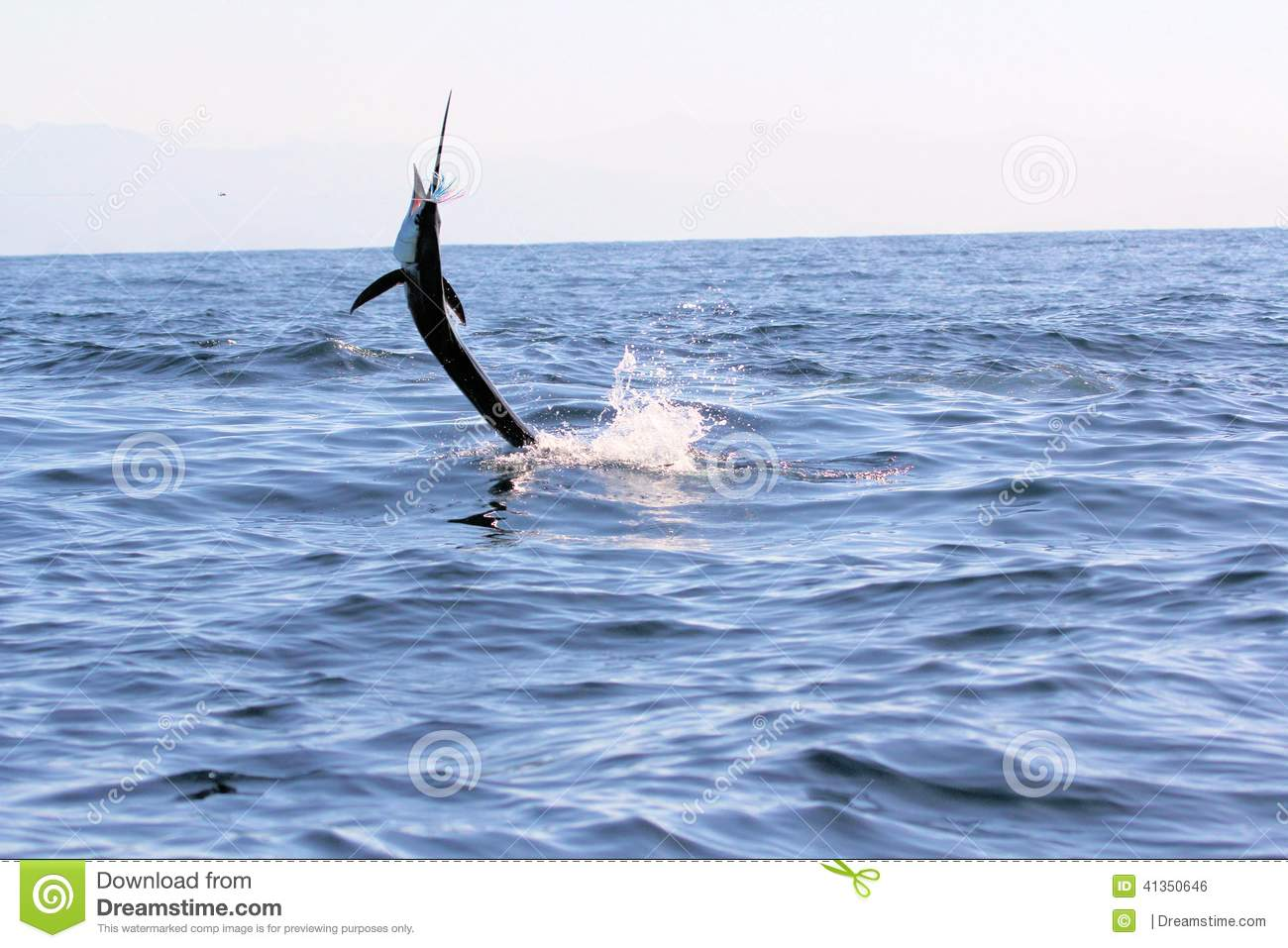 Swordfish Sailfish jumping out of the water