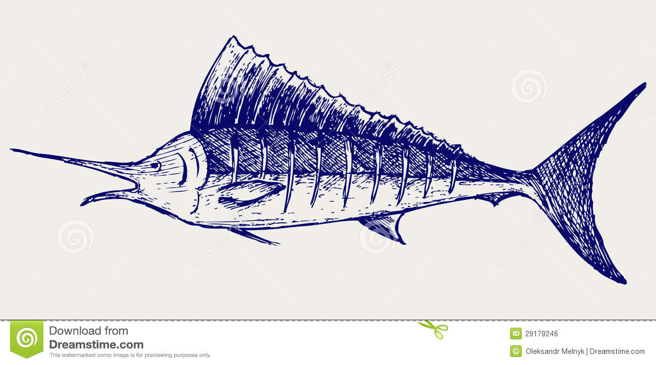 Sailfish saltwater fish stock vector image of aquatic for How to make saltwater for fish