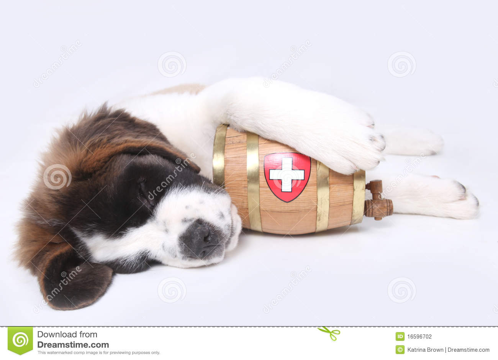 A Saint Bernard Puppy With Rescue Barrel Stock Photo