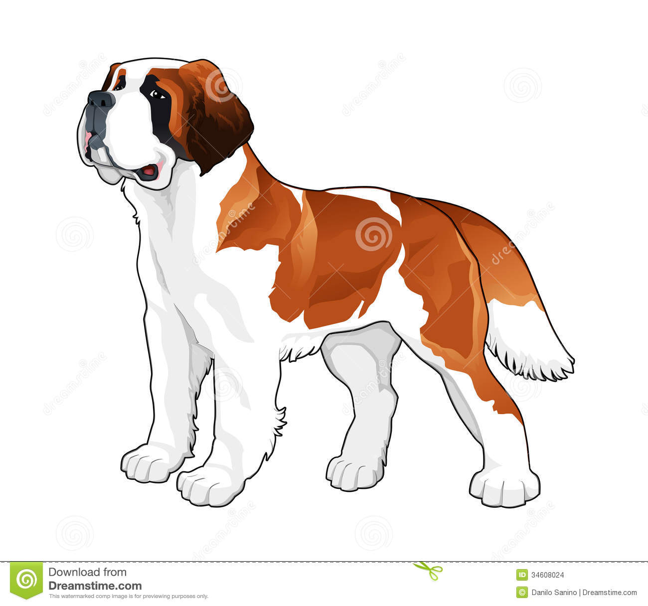 Saint Bernard Stock Images Image 34608024