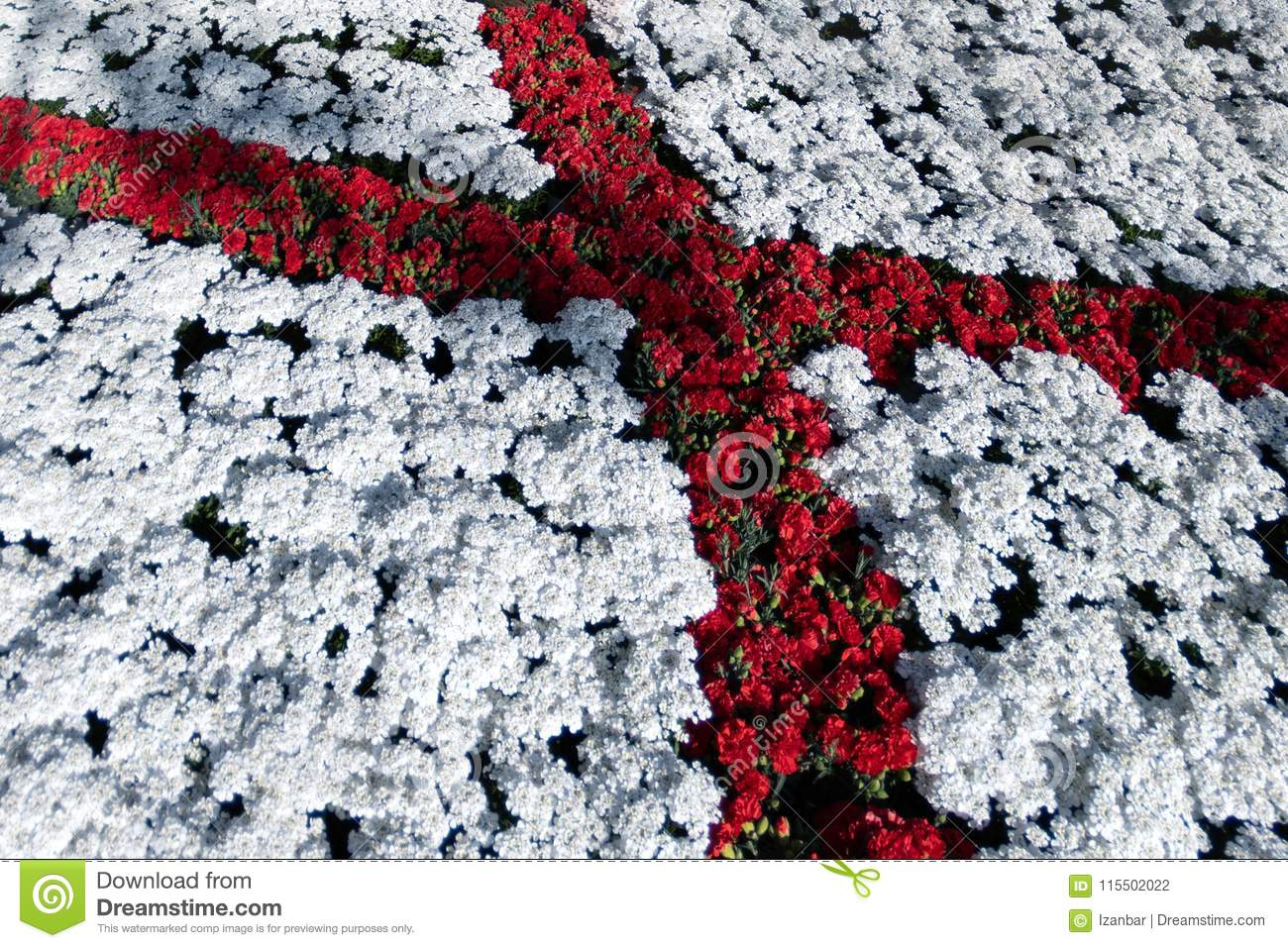 Saint george flag red cross on white made of flowers stock photo saint george flag red cross on white made of flowers mightylinksfo