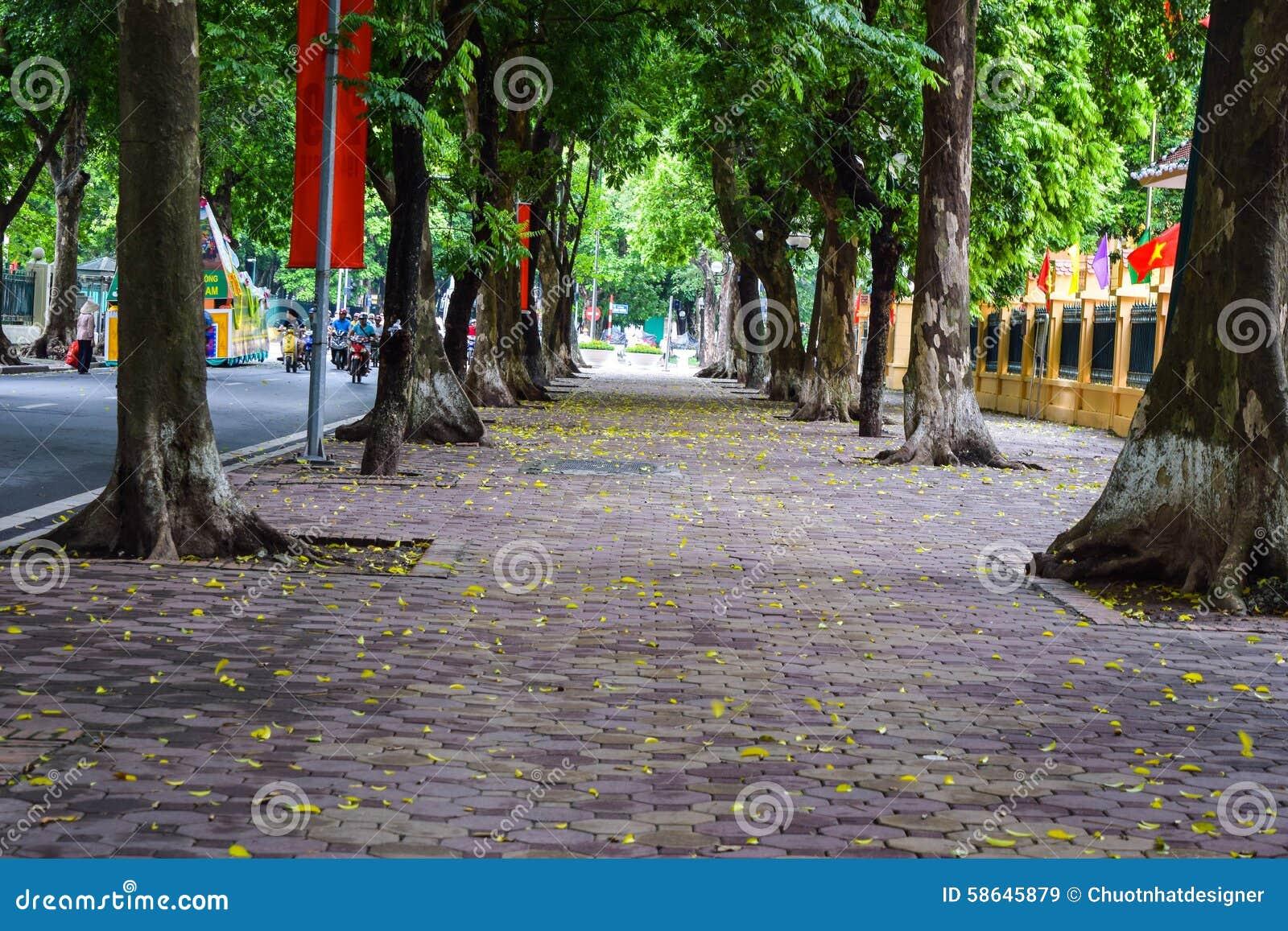 Saison de chute dans ha NOI, Vietnam